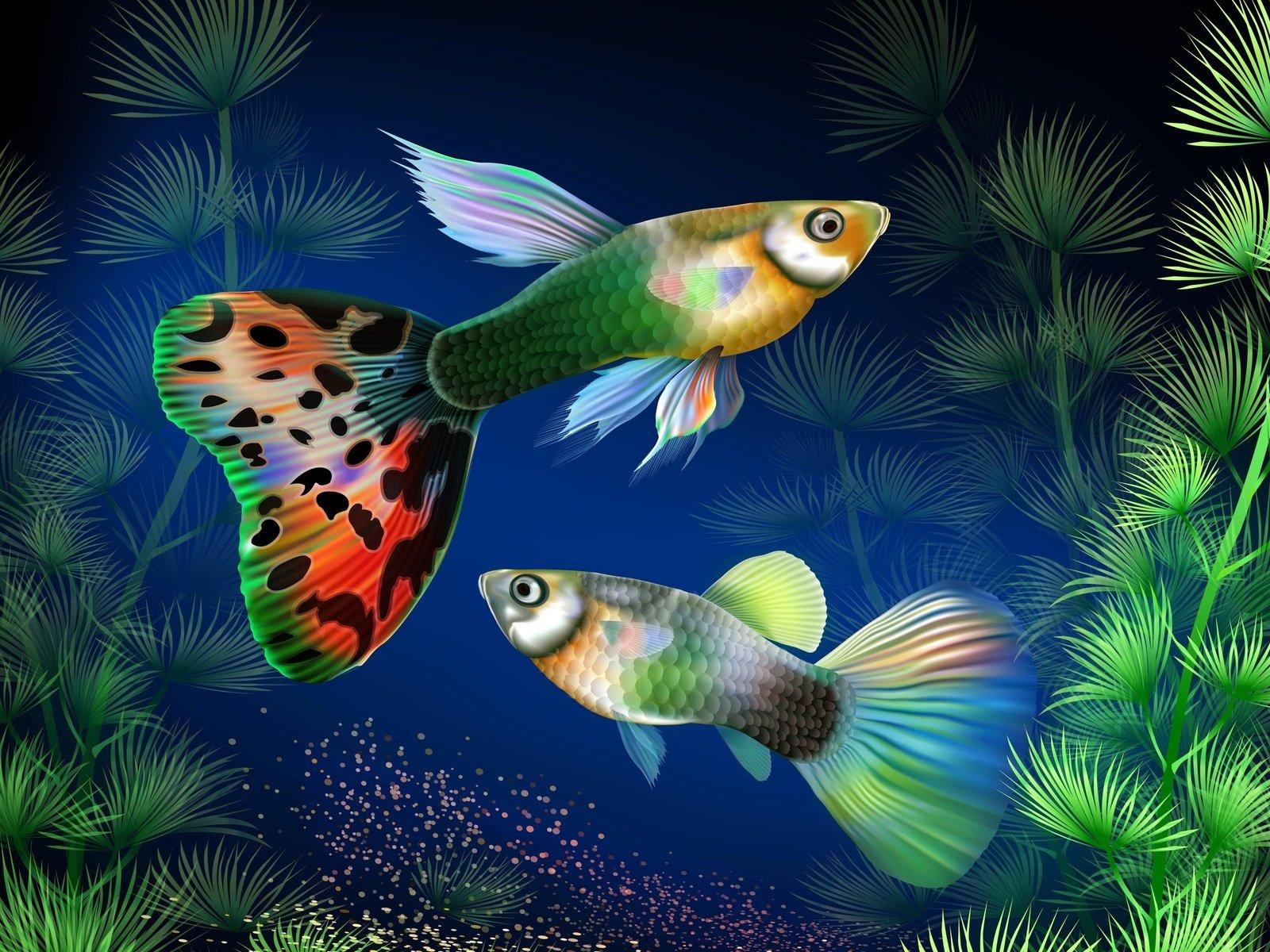 цветы картинки с рыбками можете