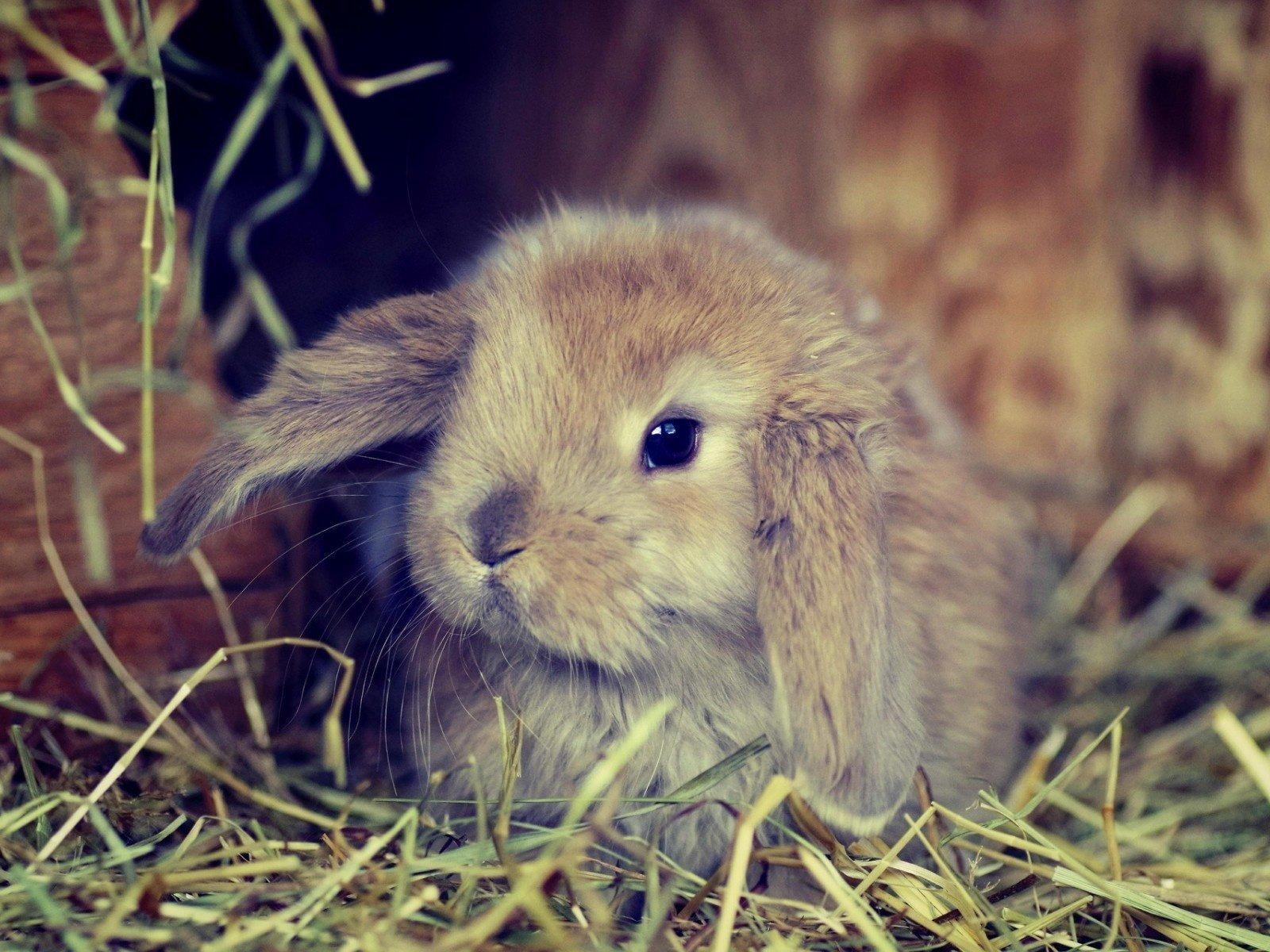 милый кролик картинка зависимости