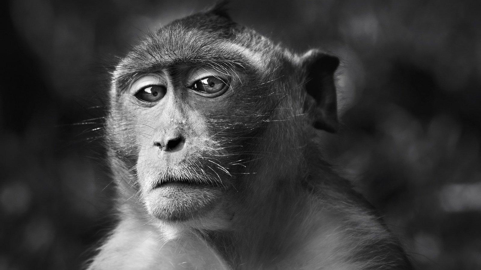 красивые фотографии черно белые для рабочего стола цап