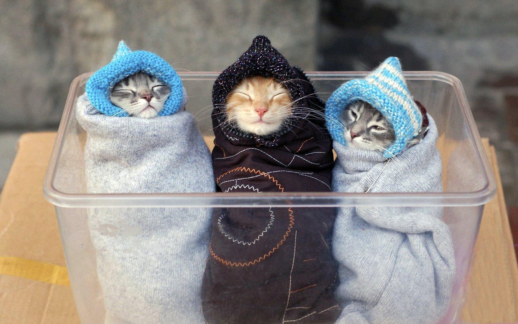 Коты и котята прикольные картинки, виде