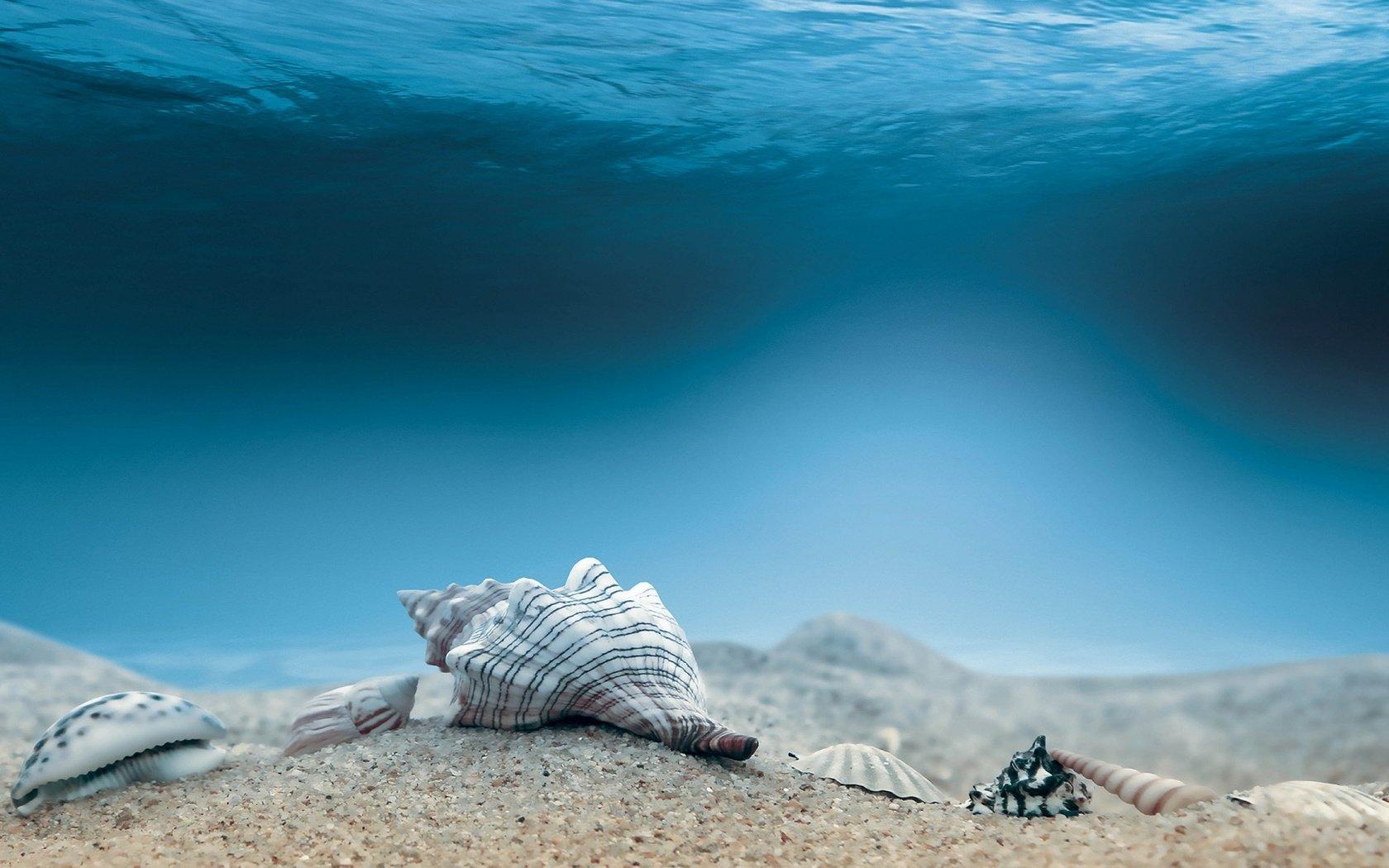 острова песчаное дно под водой с ракушками фото собрать картинку