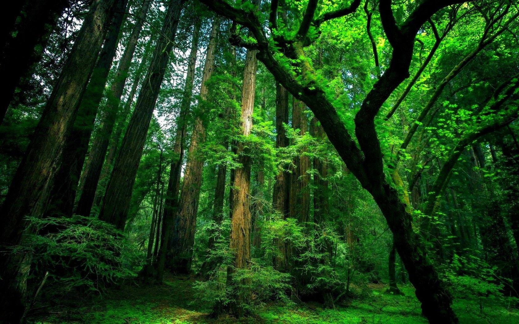 v-lesu-na-prirode