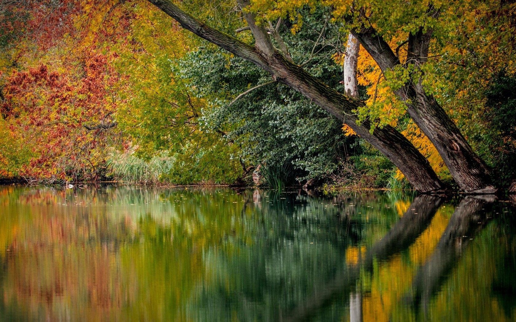 природа деревья река отражение осень nature trees river reflection autumn без смс
