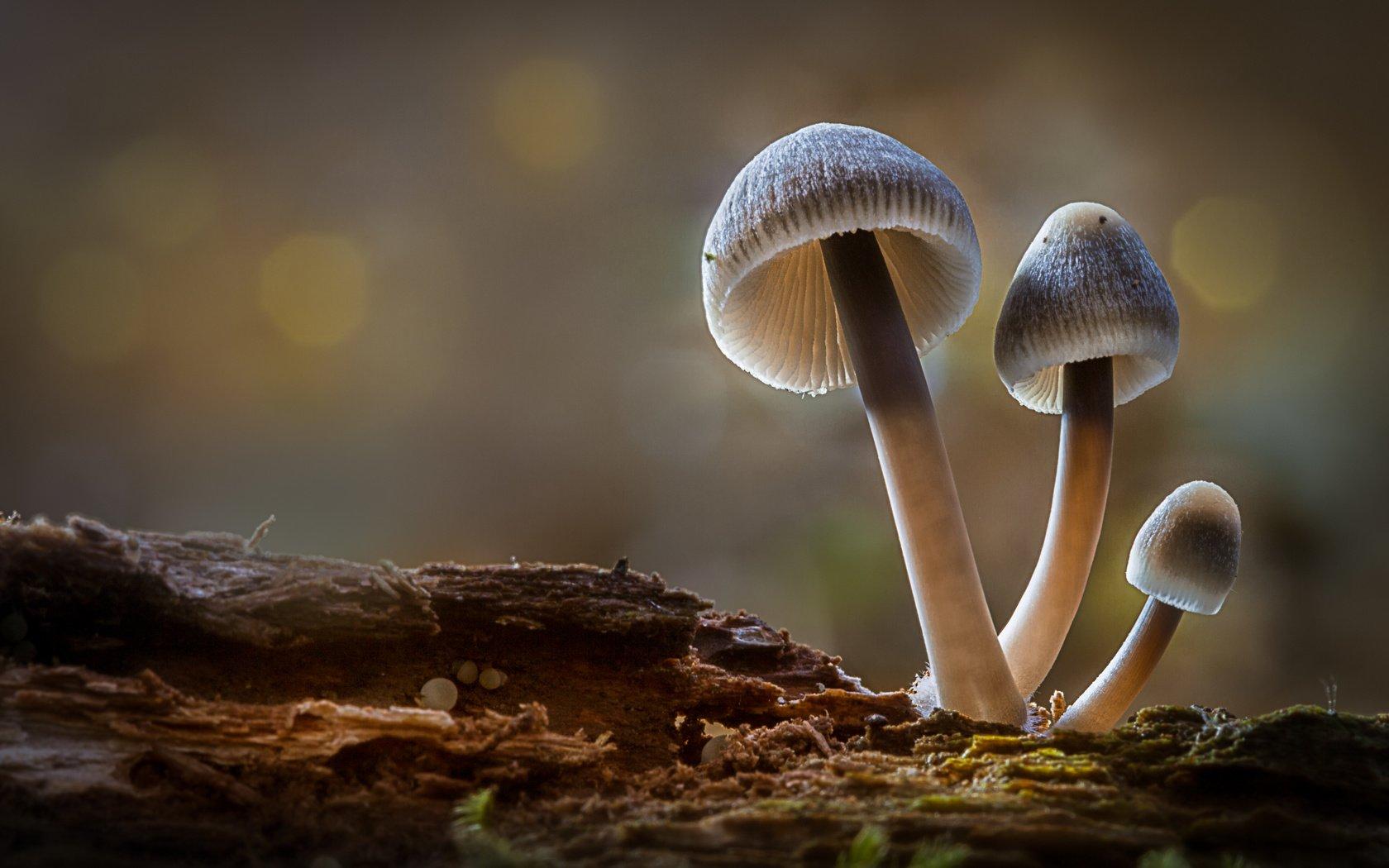 скачать фильм грибы 3d через торрент