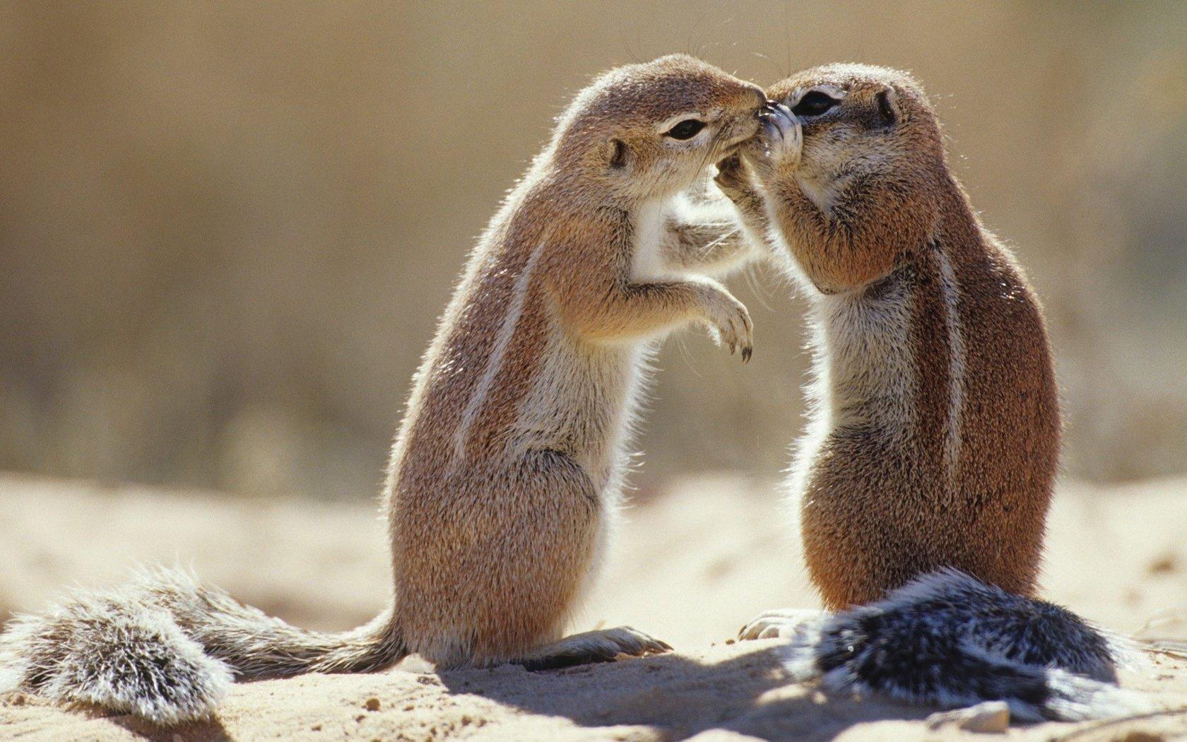 Уходит, влюбленные животные прикольные картинки