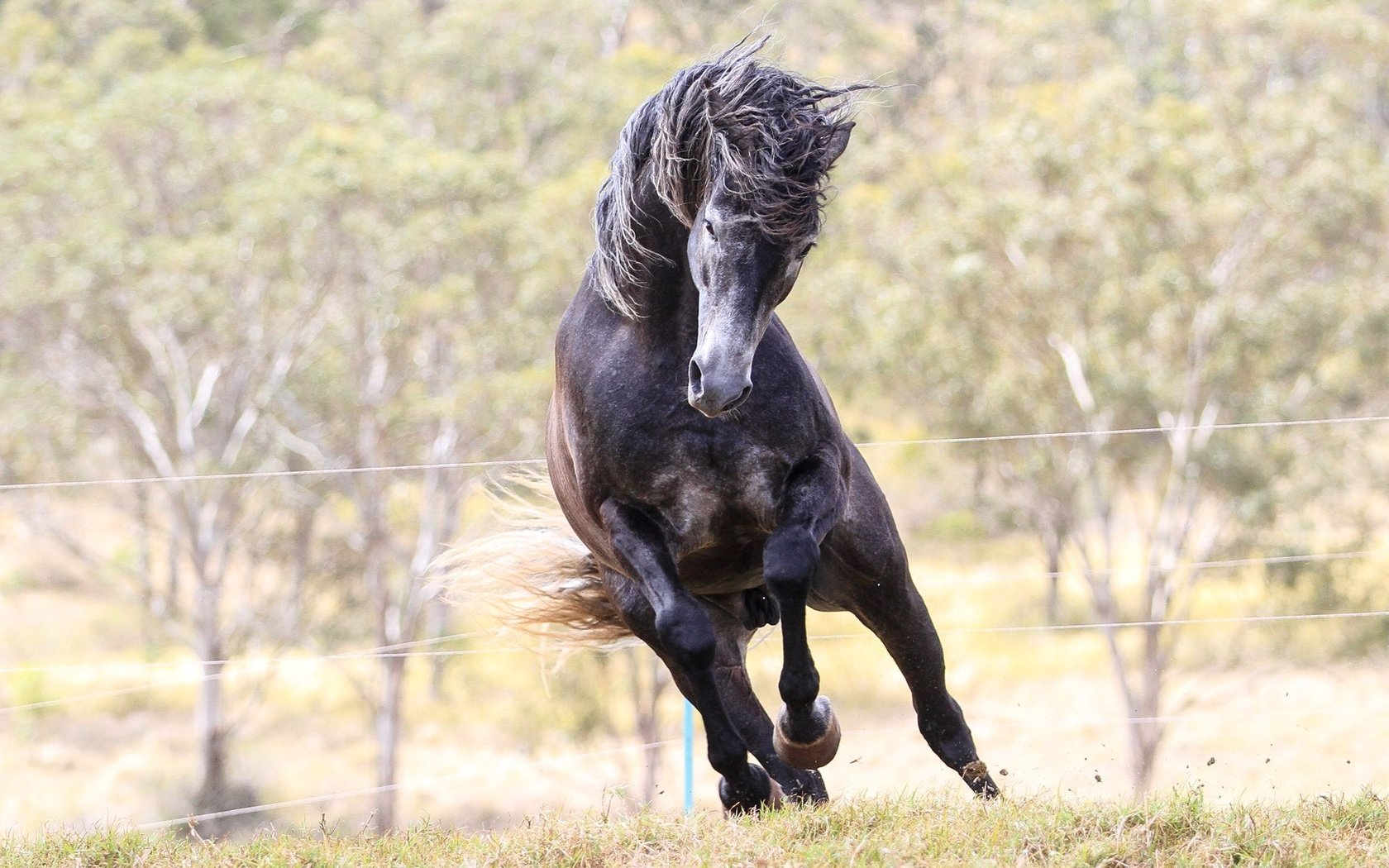 фото коня на дыбах всех