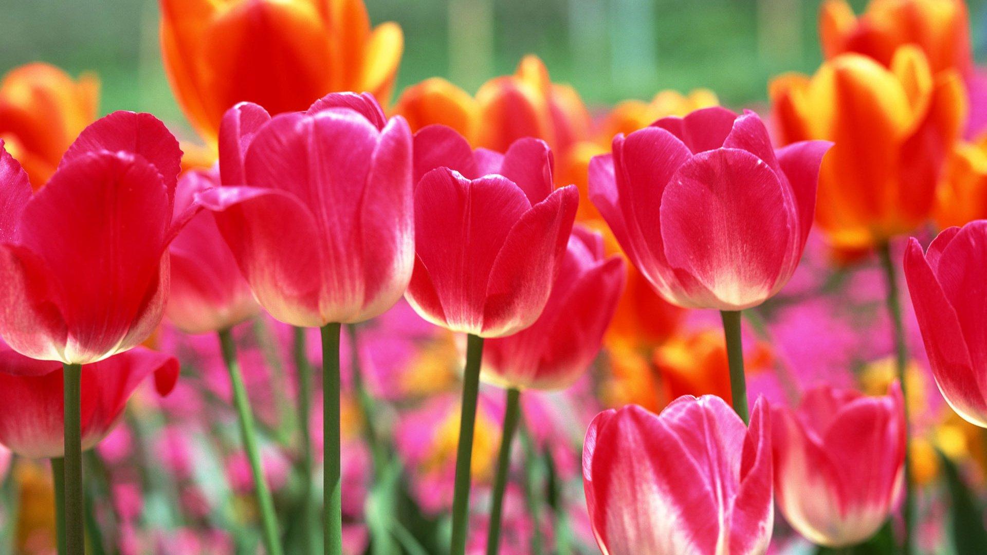 Картинки весна цветы красивые