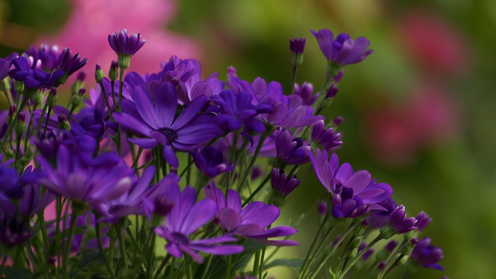 обои на телефон летние цветы осенне зимний период