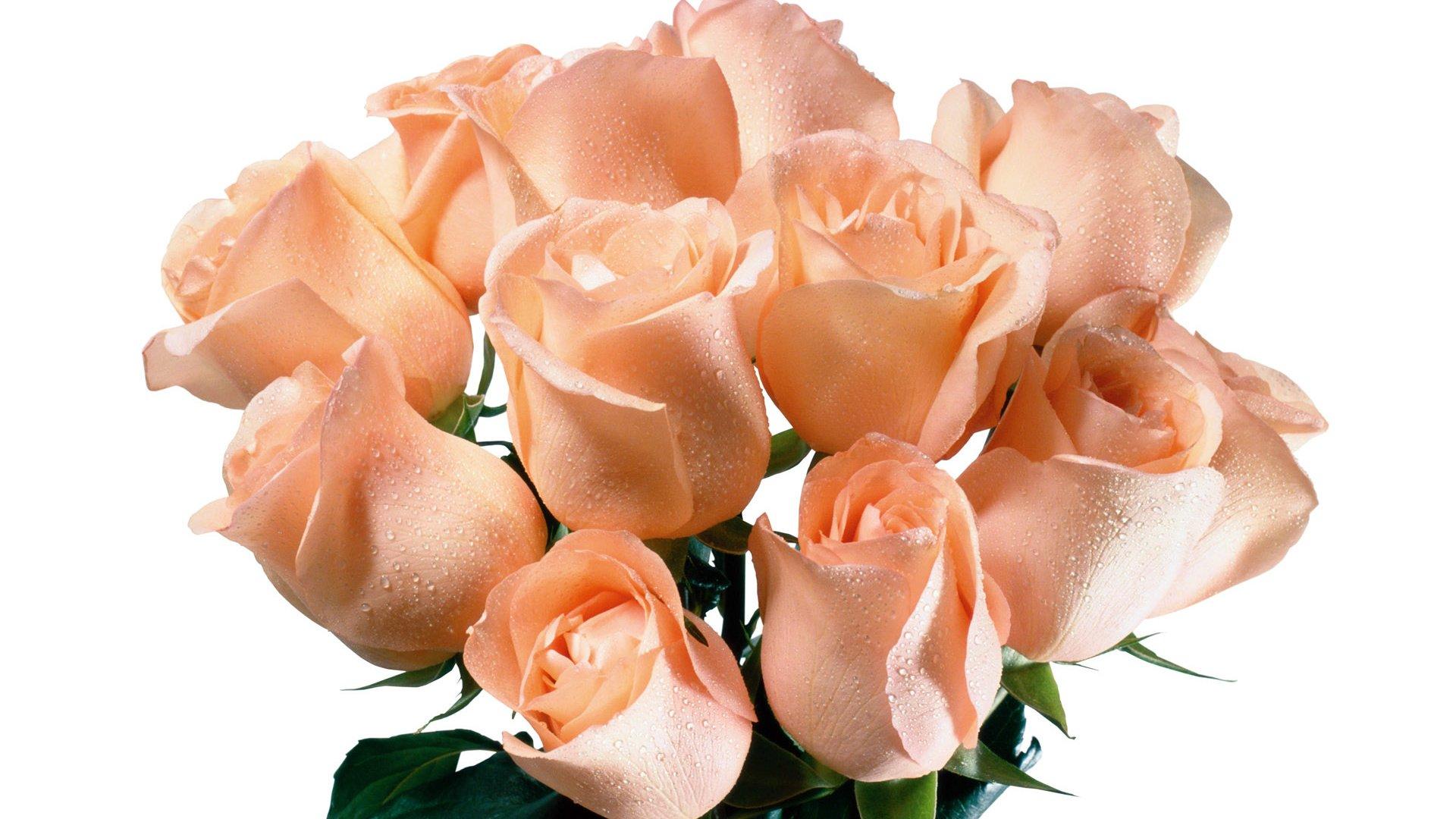 вещевого обеспечения букет роз для наташи картинка аккорда