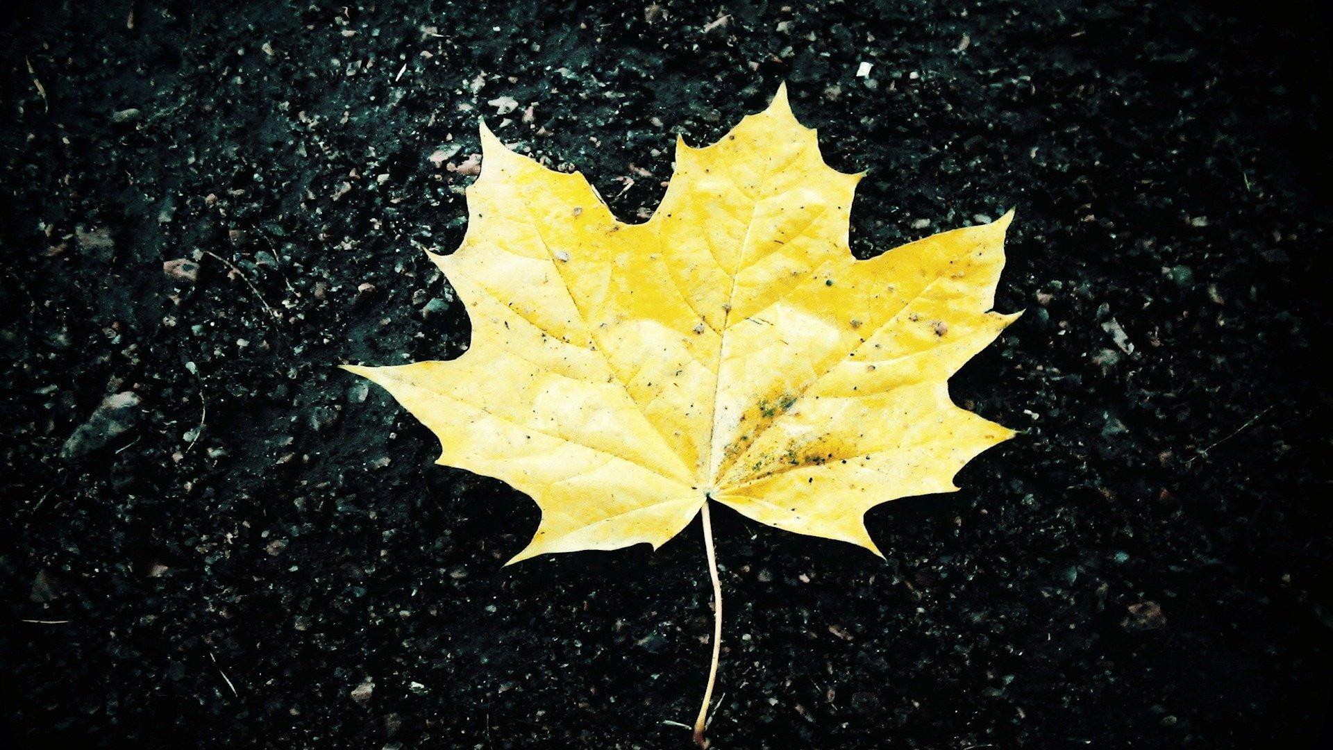 Обои желтые, асфальт, осень. Природа foto 16