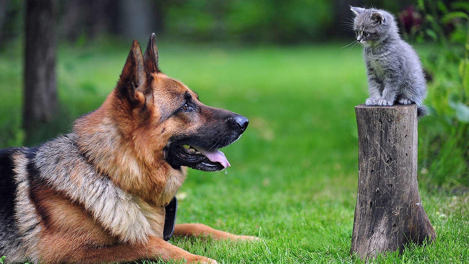 собака пенек блики загрузить