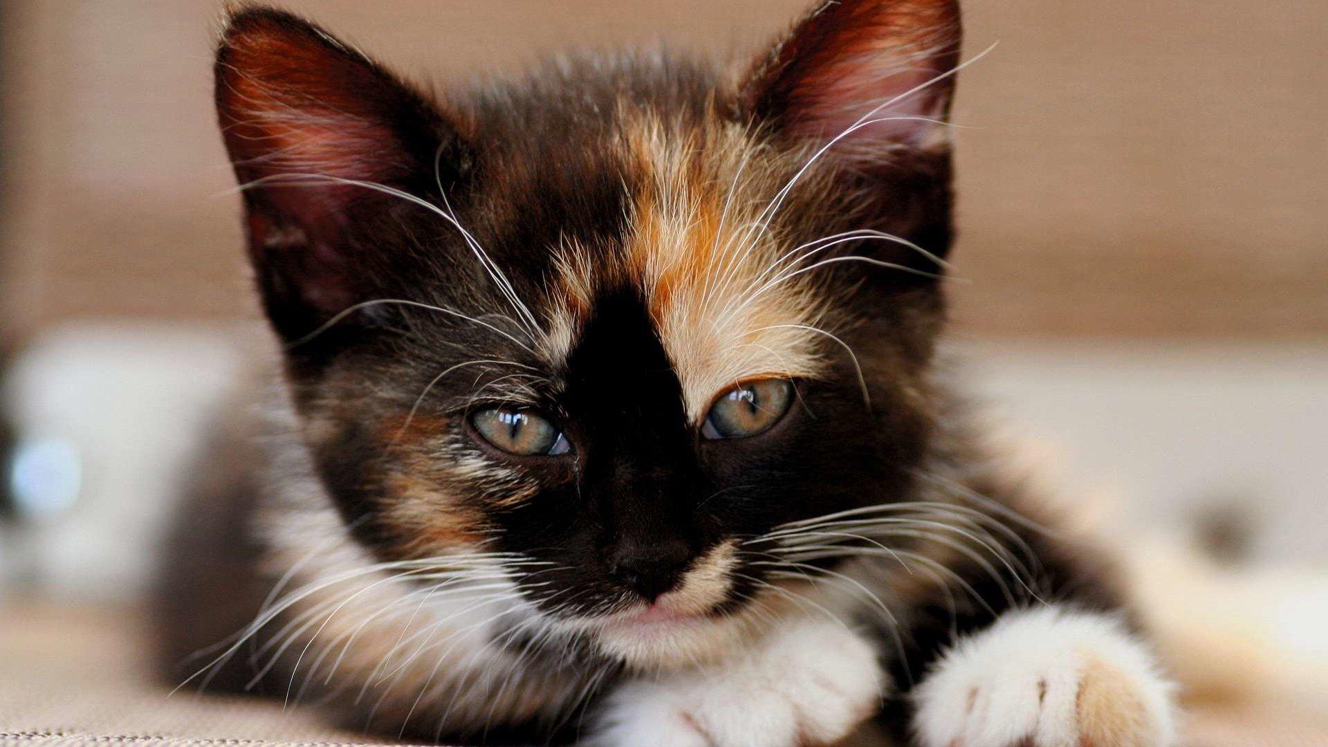 Картинки прикольные кошки большое разрешение изображении очень