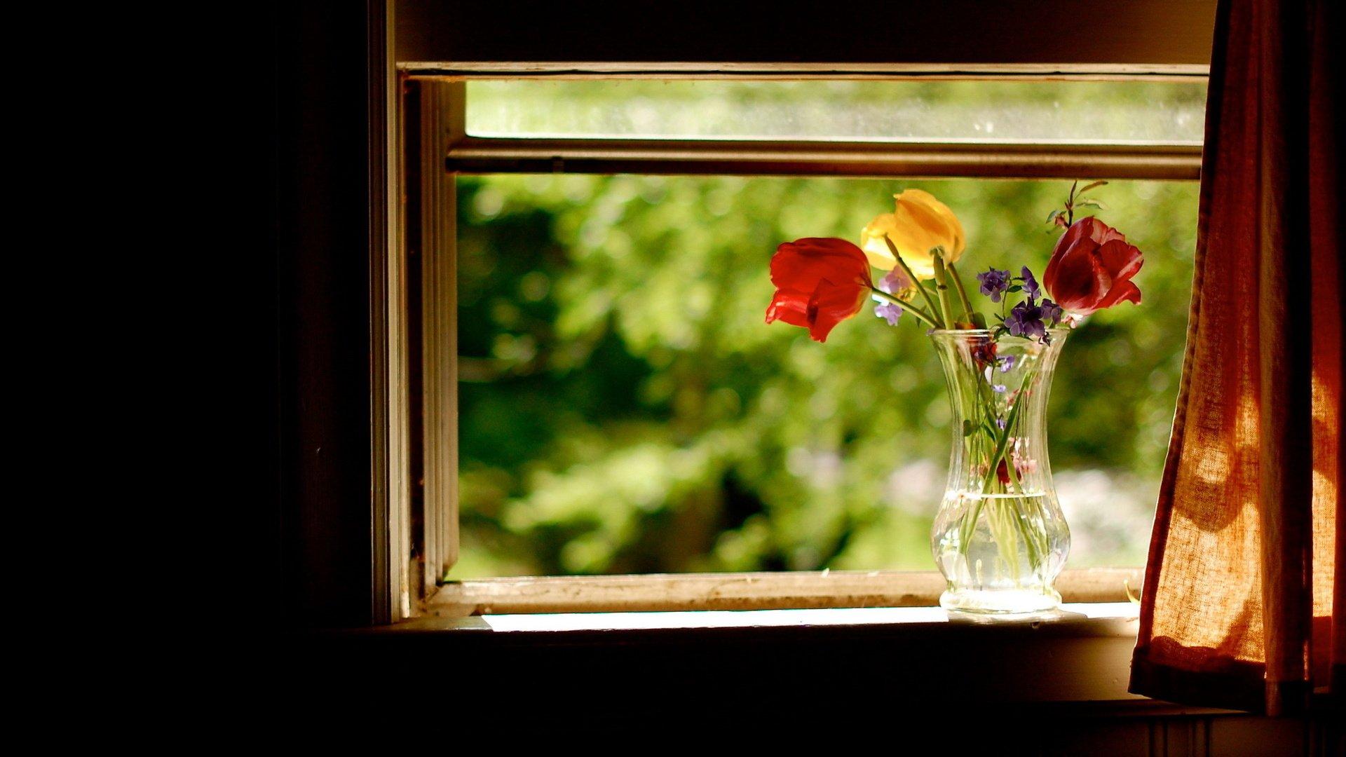 Картинки окно с цветами высокого разрешения