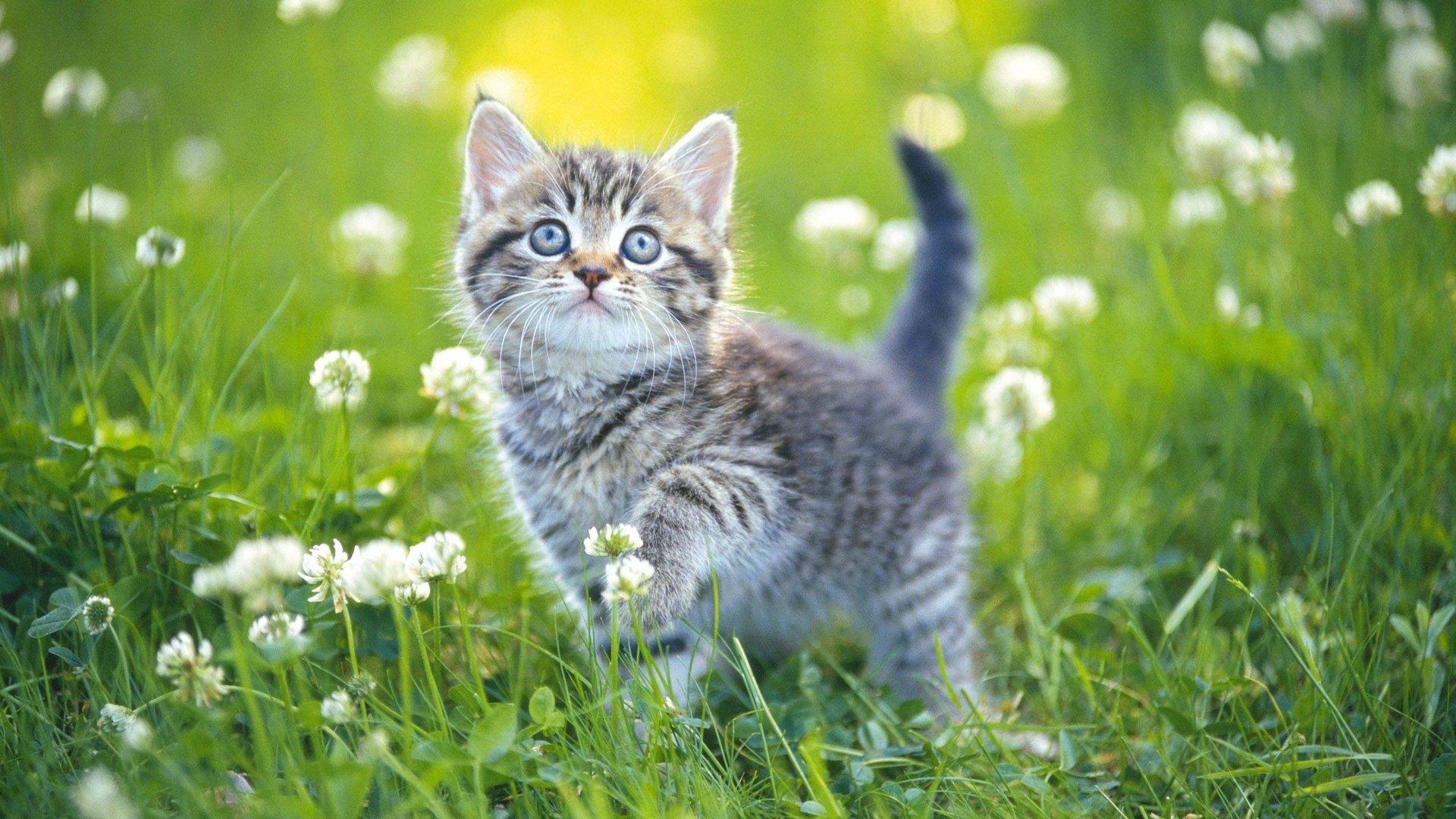 Рыжий котенок в траве в хорошем качестве