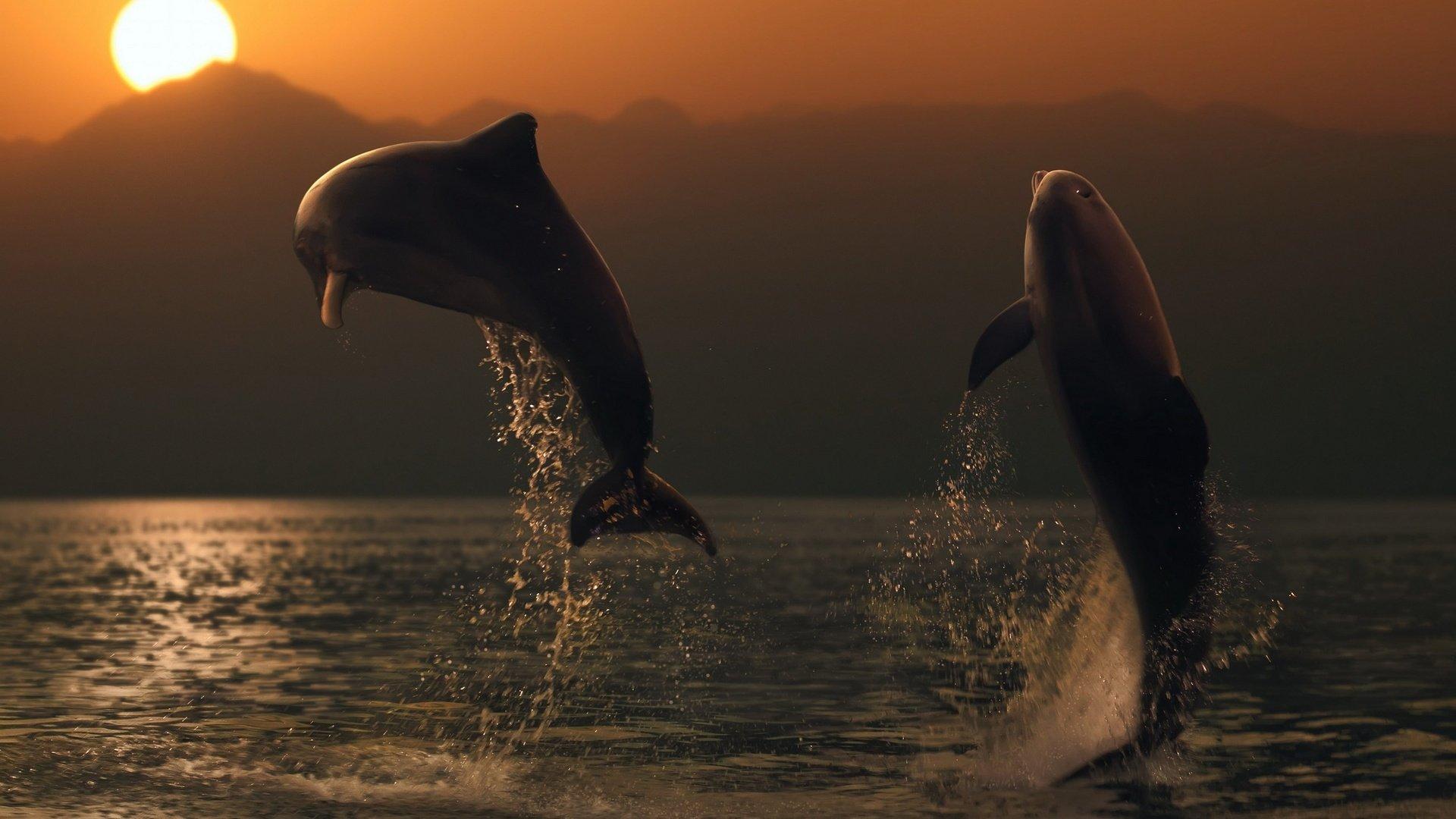 картинки дельфины море солнце размороженных