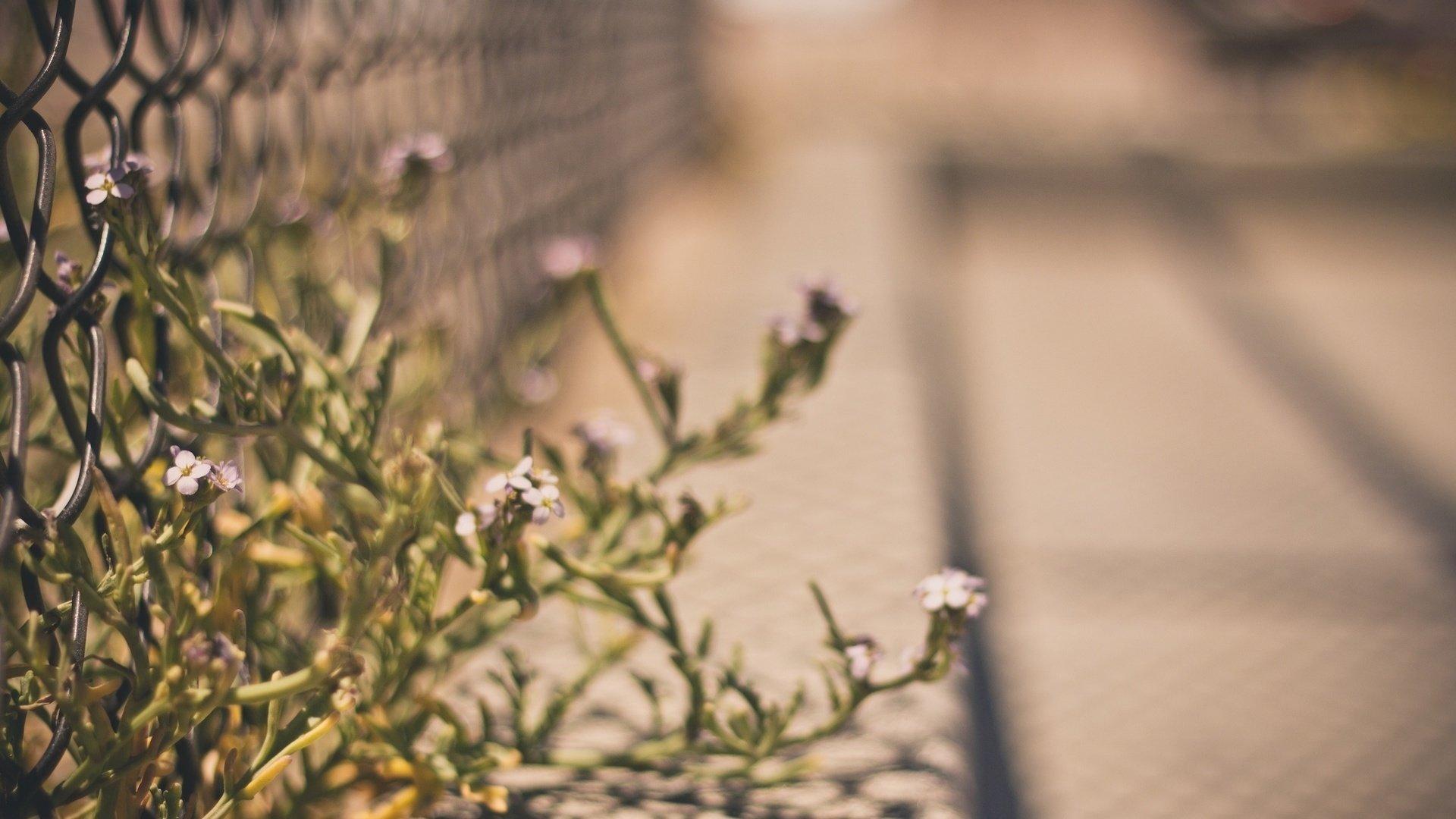 Цветок прорастающий сквозь сетку забора смотреть