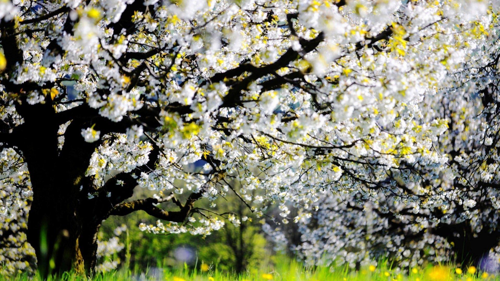 красивые бесплатные цветущий сад фото высокого разрешения поселок настоящим глубоким