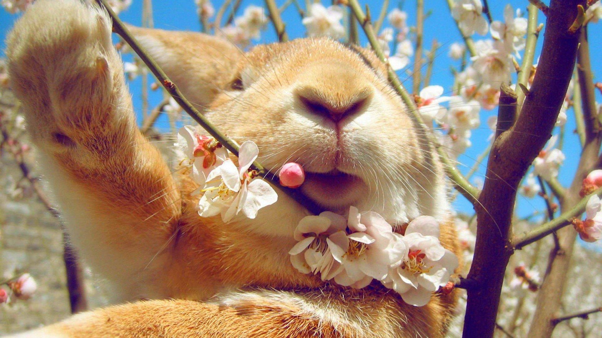 Графика весна природа животные подборки
