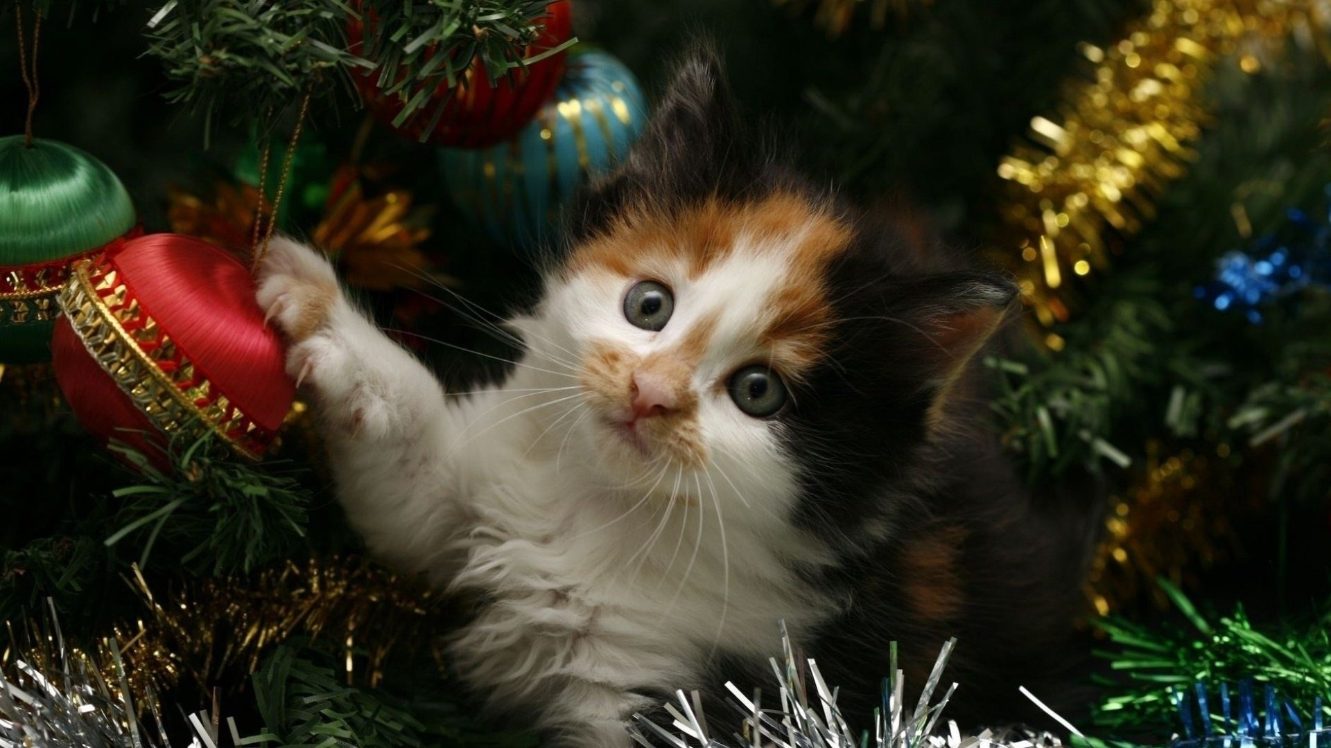 указал также с новым годом котенок картинки без