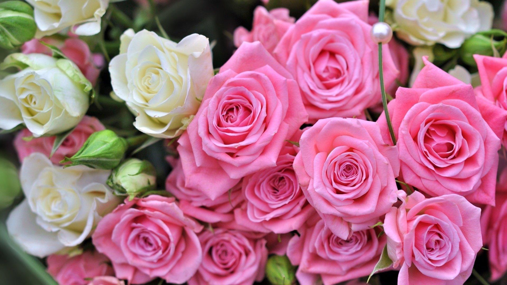 Обои цветы розы букет