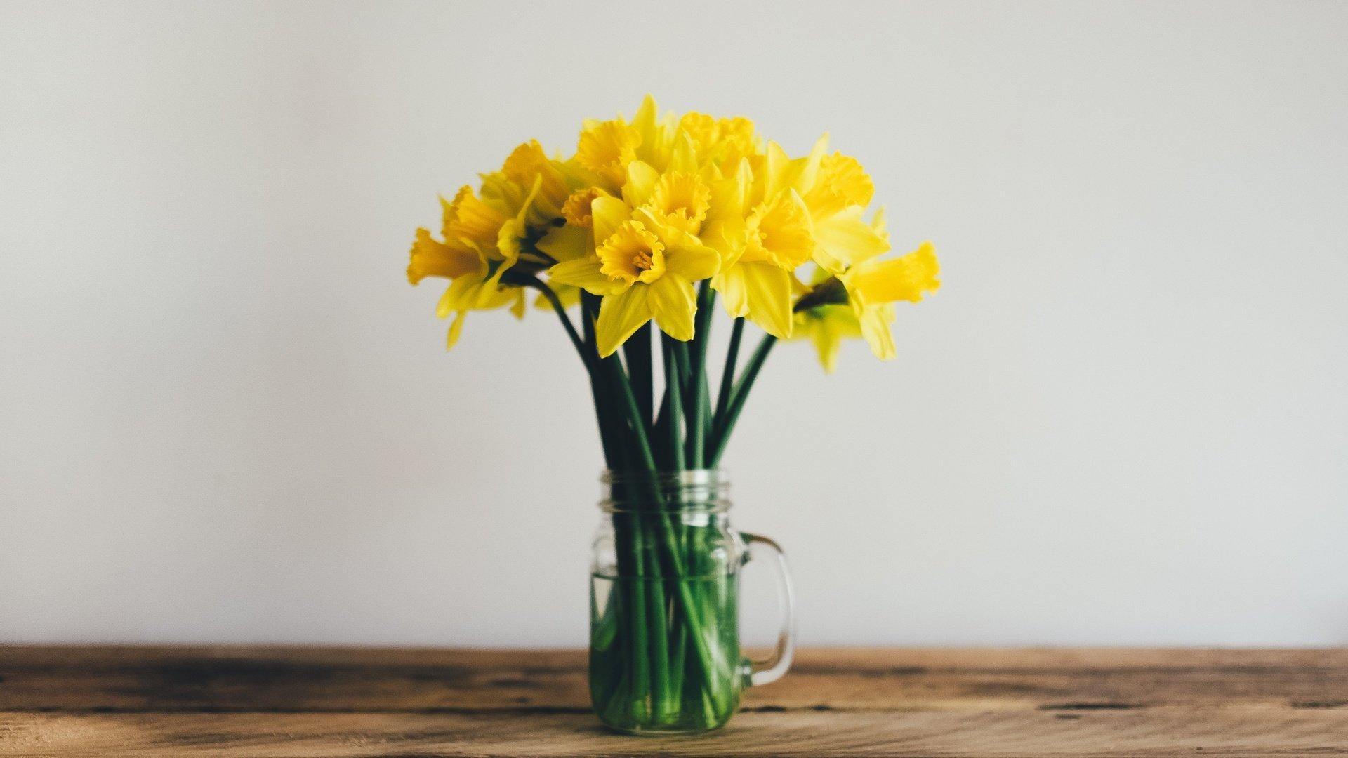 нарциссы желтые цветы окно онлайн