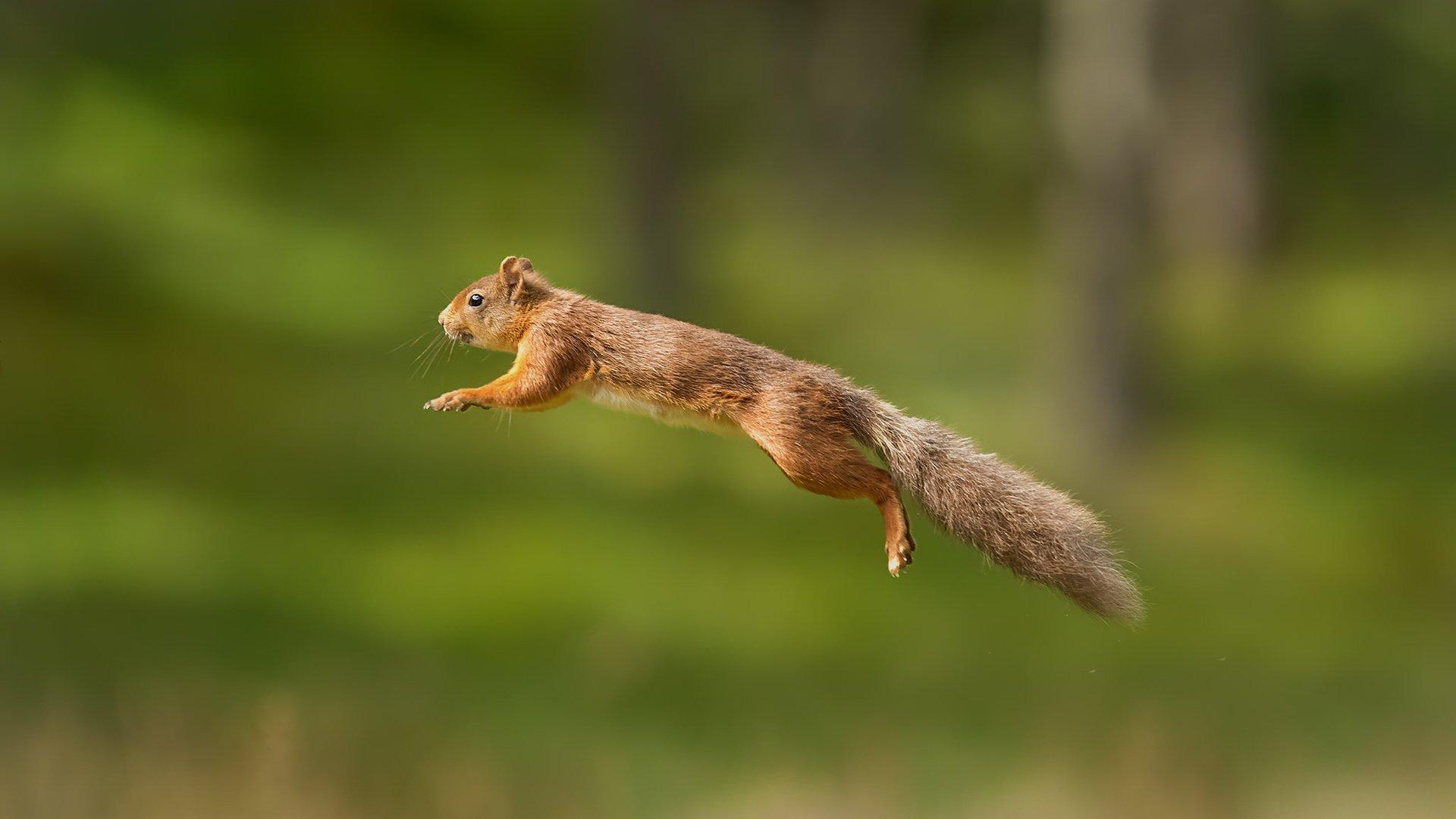Flying Squirrels - Biology, nesting behavior - Sialis Photos of flying squirrels