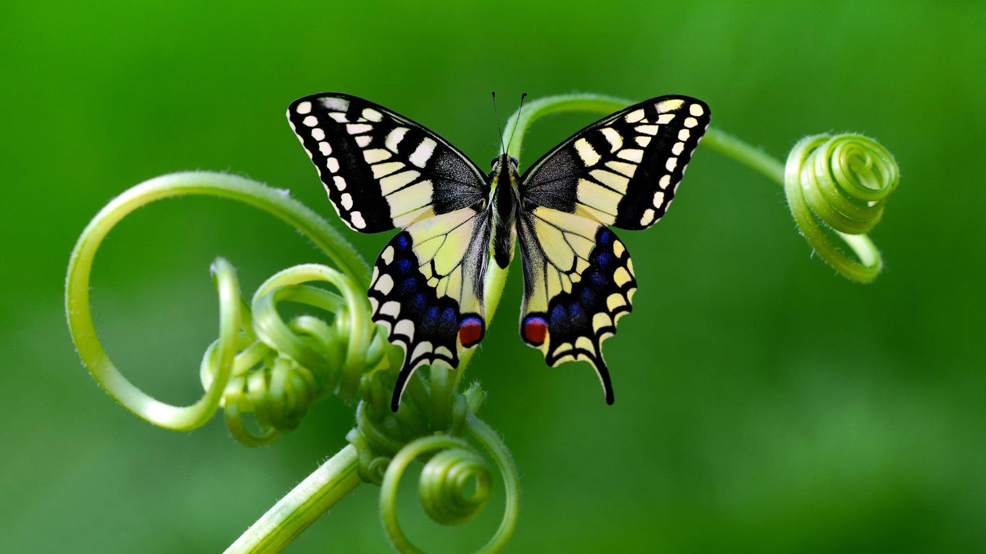 Бабочка на цветке макро без регистрации