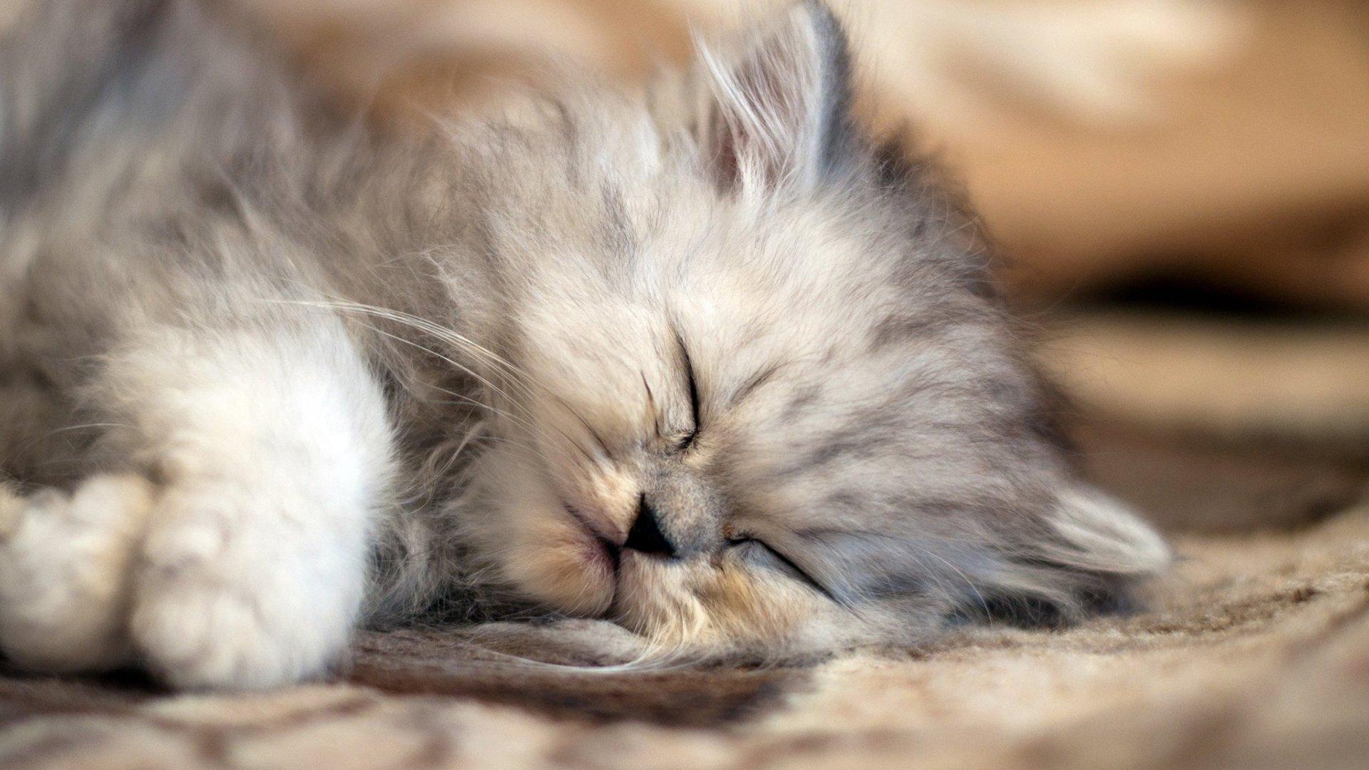 фото сладкие кошечки его
