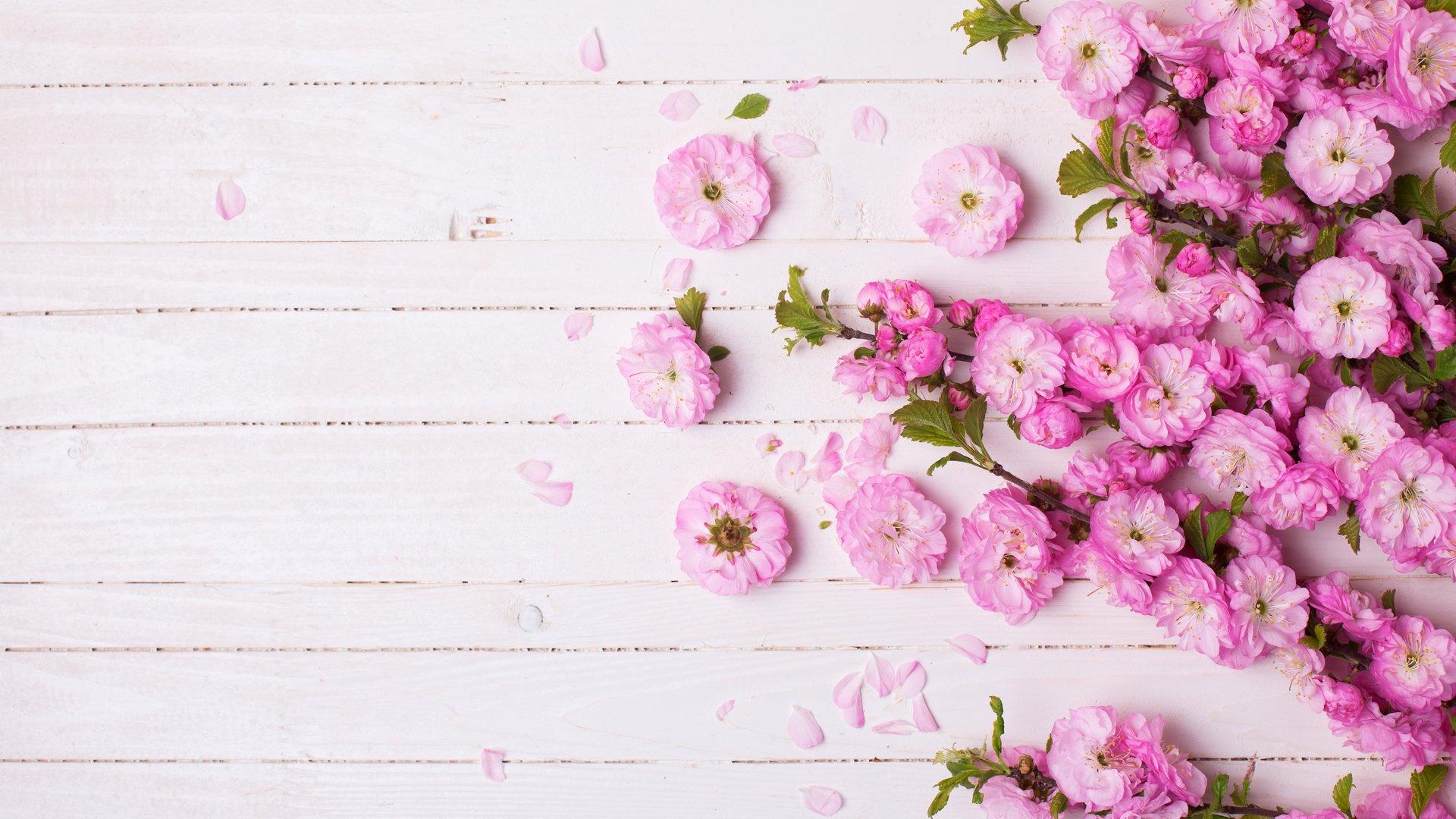 каждому красивый фон с цветочками картинка разбирались