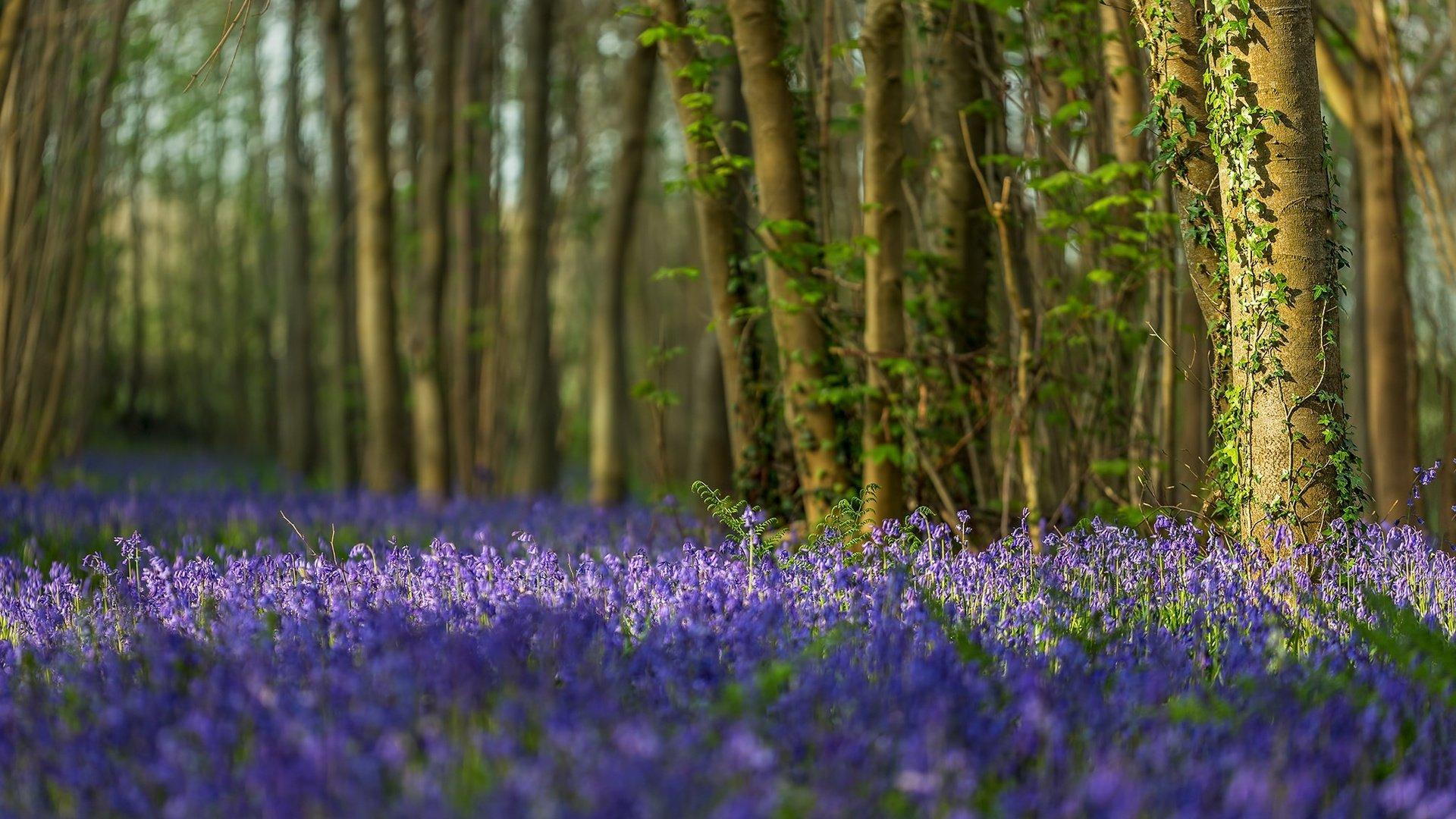 картинки деревья цветы трава вода оберегала дочь