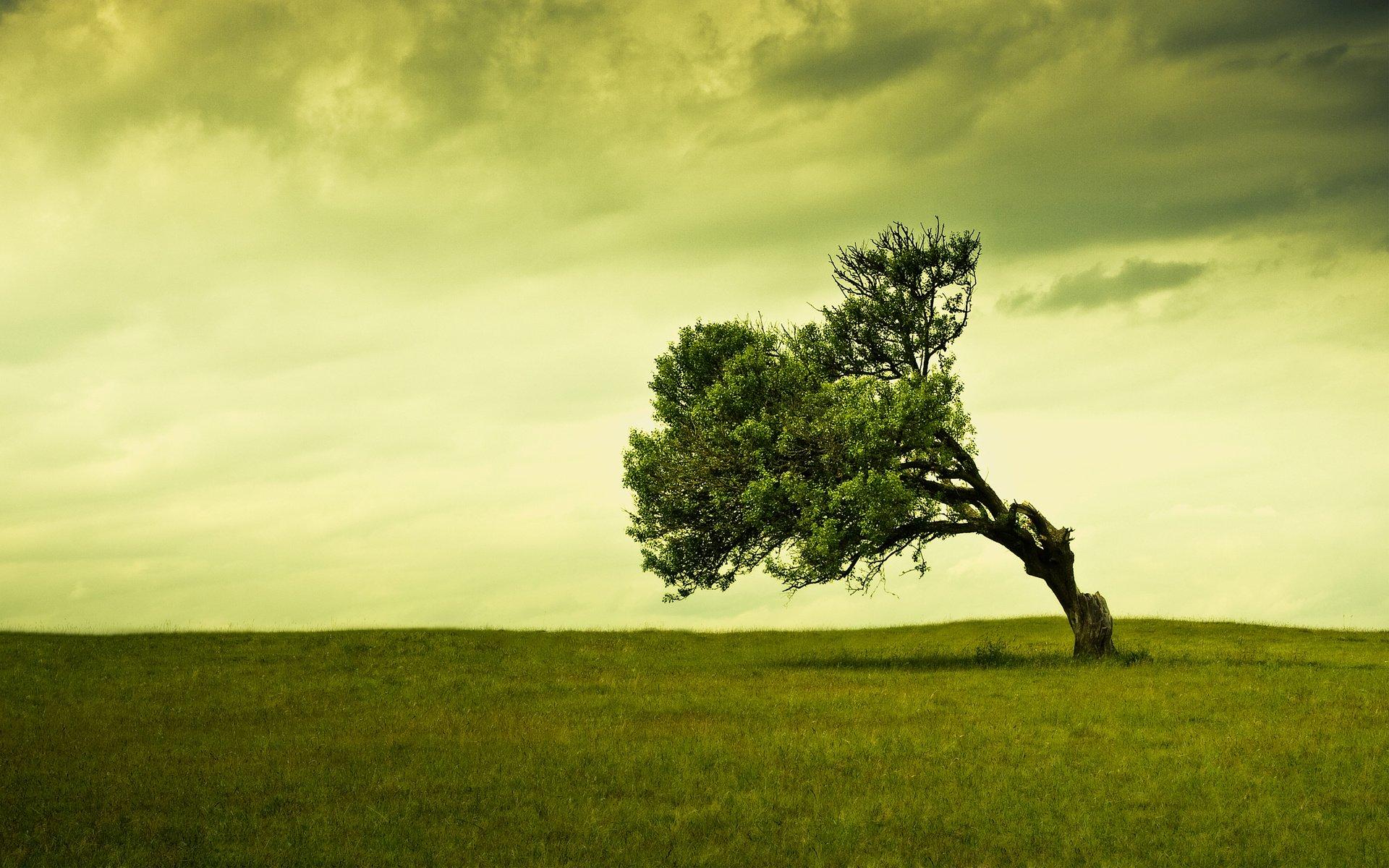 дерево поле  № 438998  скачать