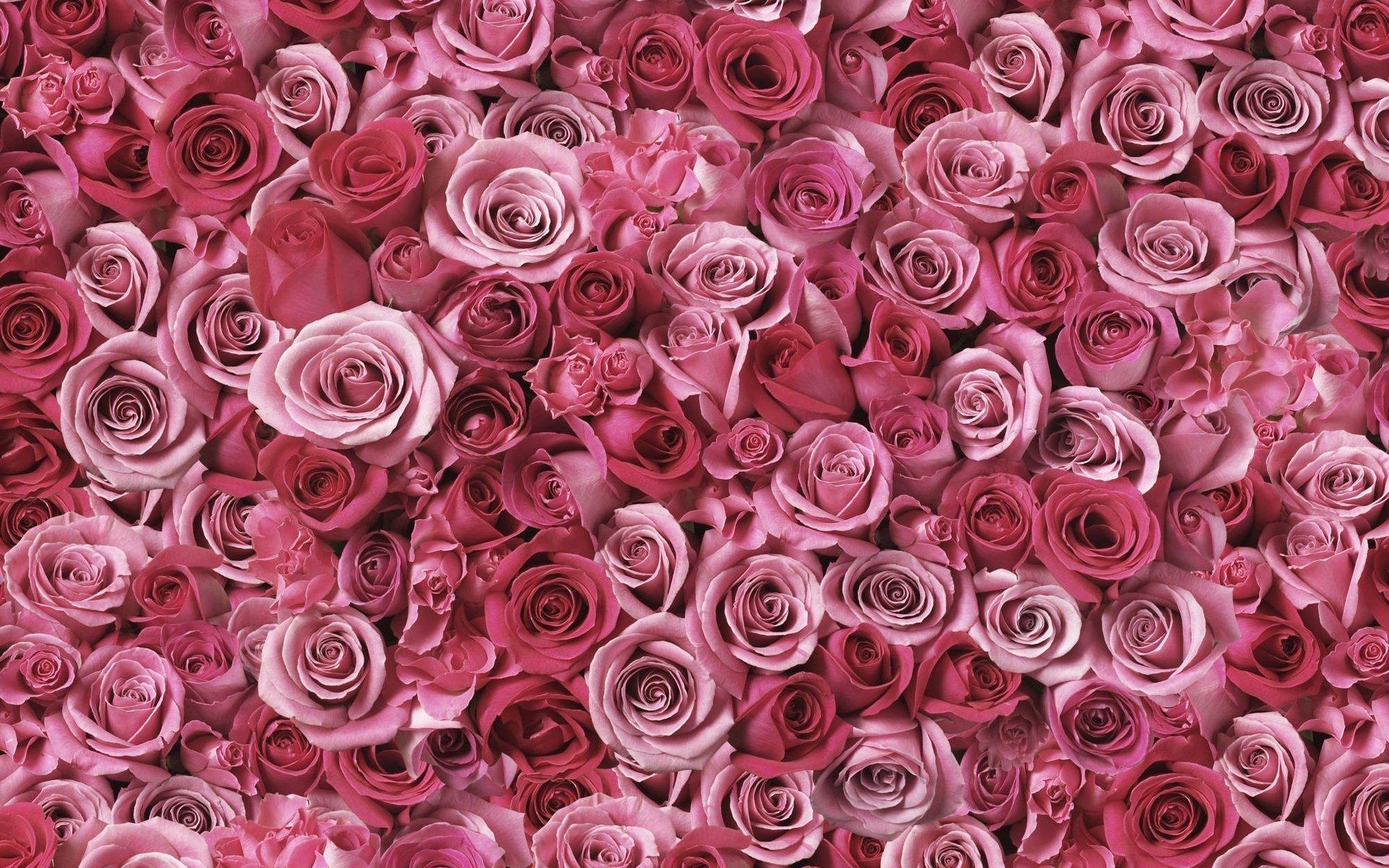 описание обои на самсунг розы просуществовала недолго, сделала