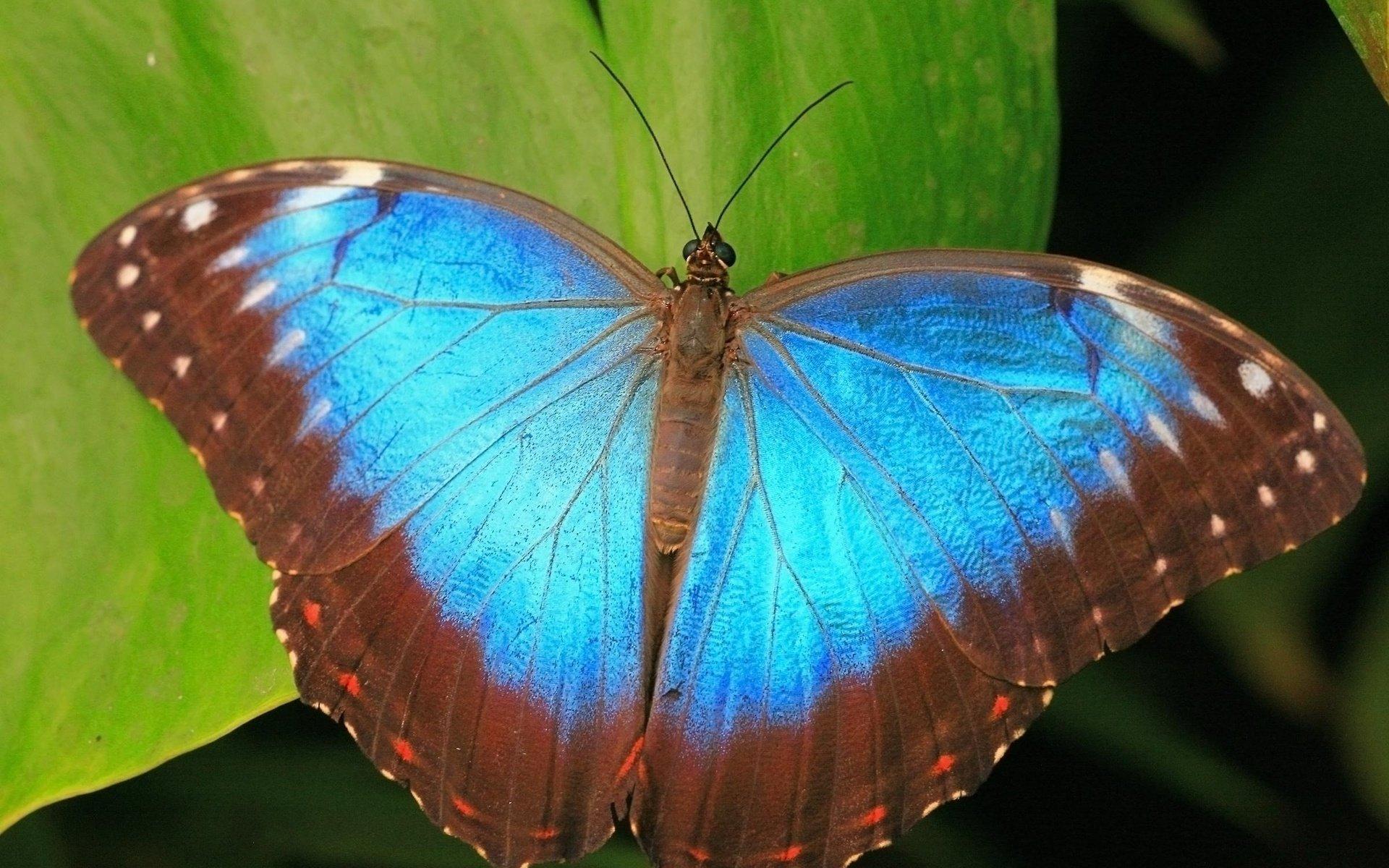 фото бабочек высокого качества рада всех девушек
