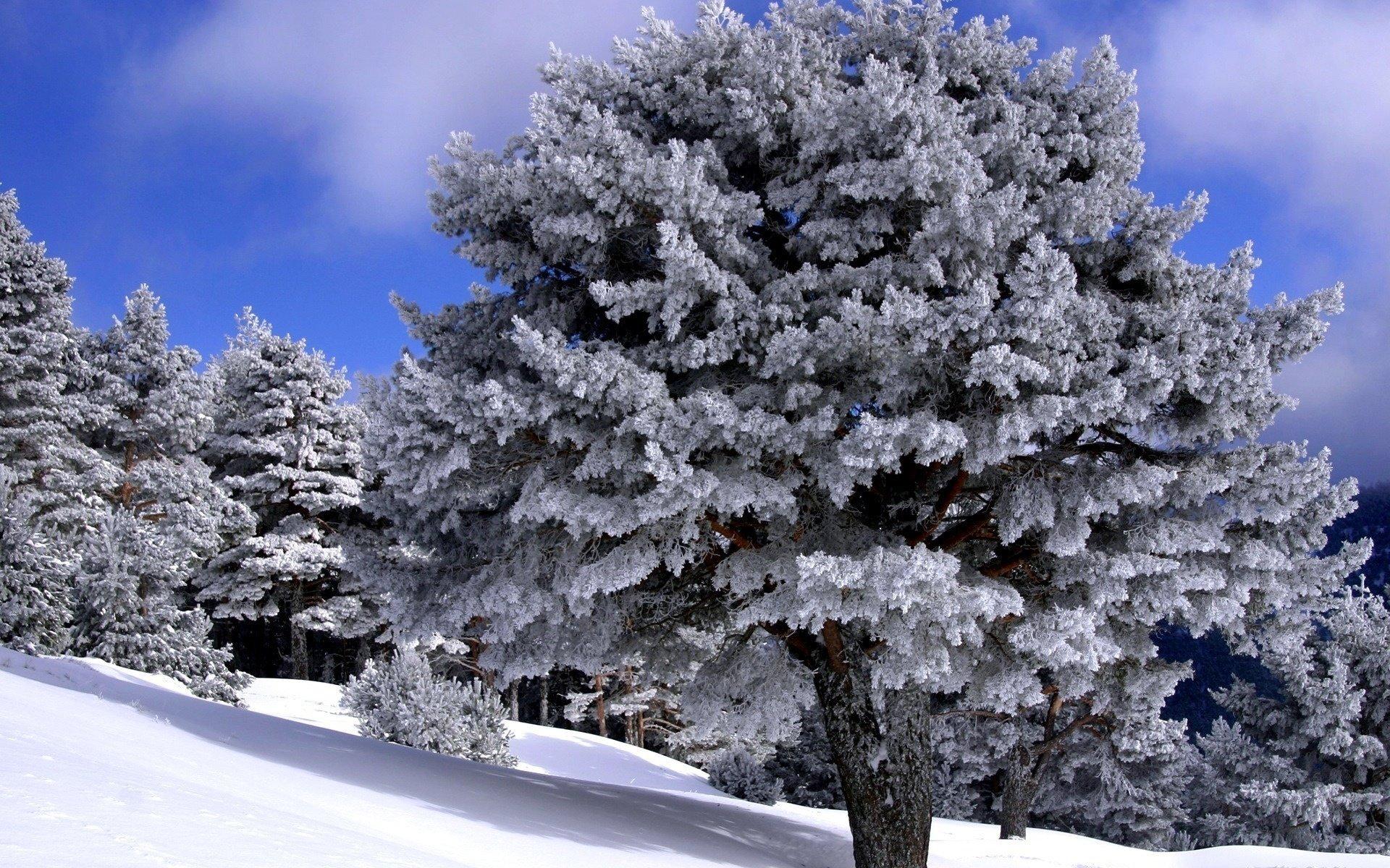 картинка лес зима деревья скажу