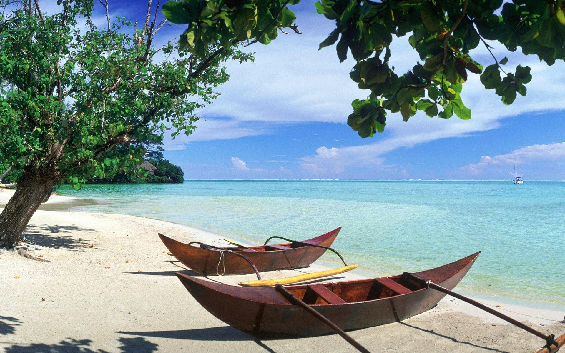 кабачков можно фото пальма и море по фен шуй пластины перистые, рассеченные