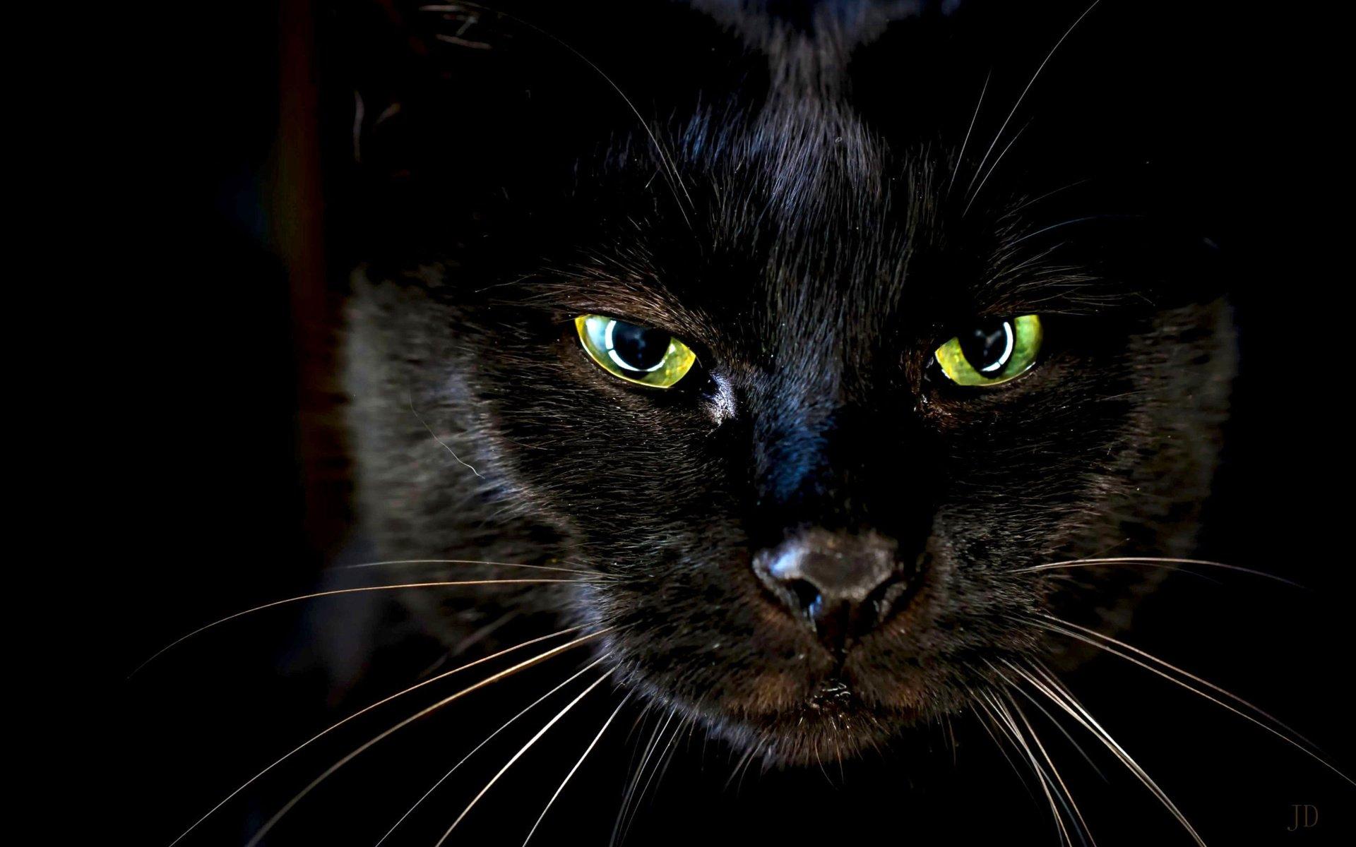 картинки глаз черной кошки связи этим скандал