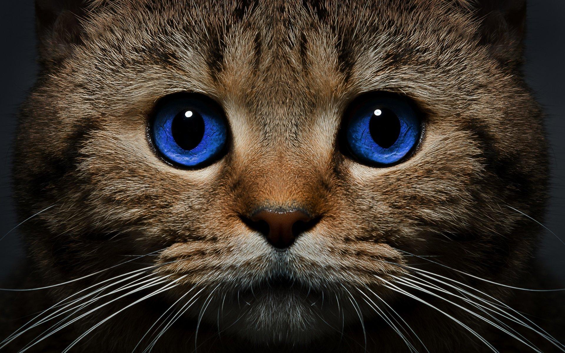Картинки и кошек