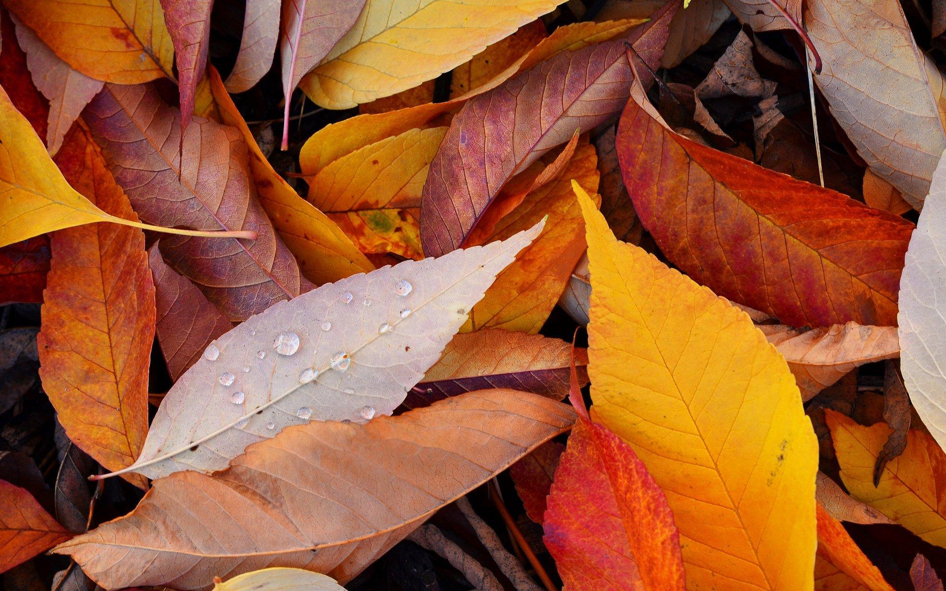 обои желтые листья саратова