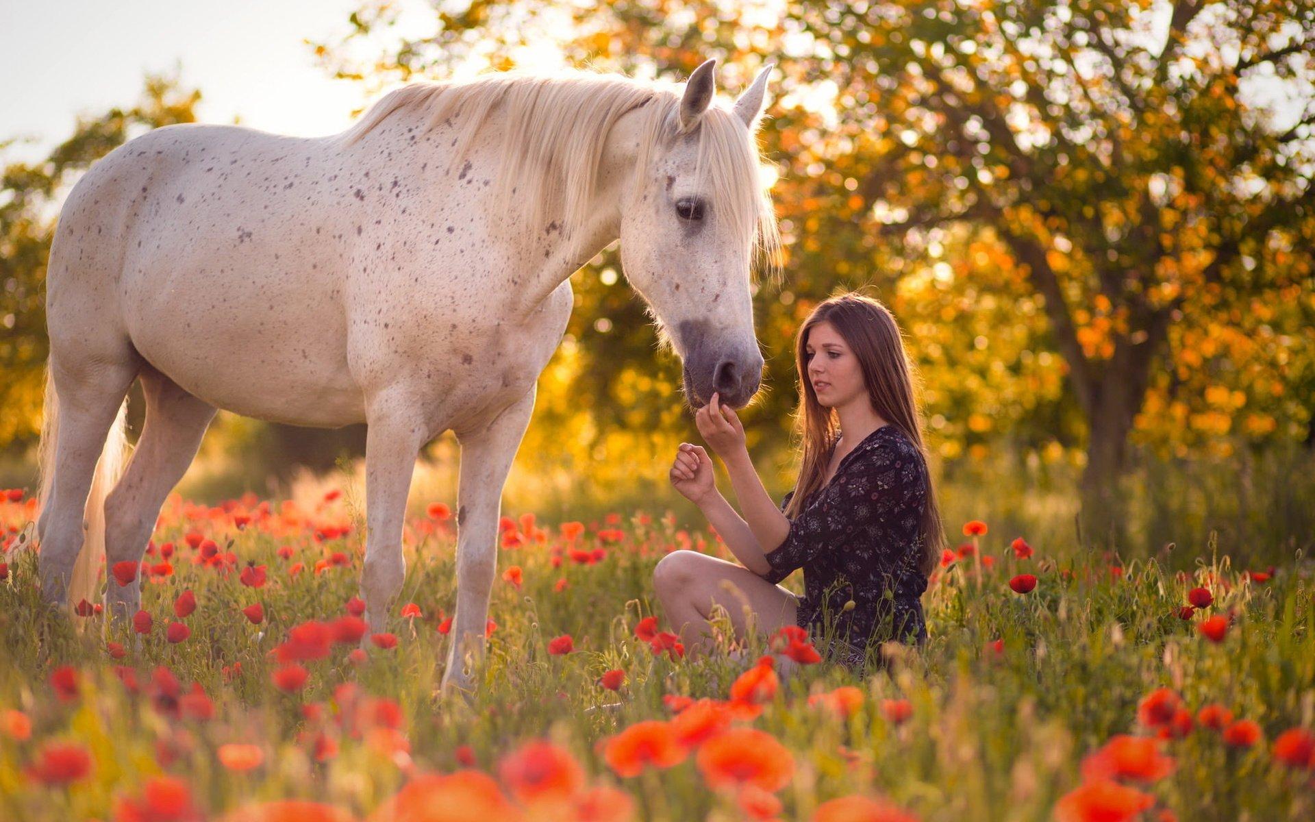 девушка лошади  № 1819052 бесплатно