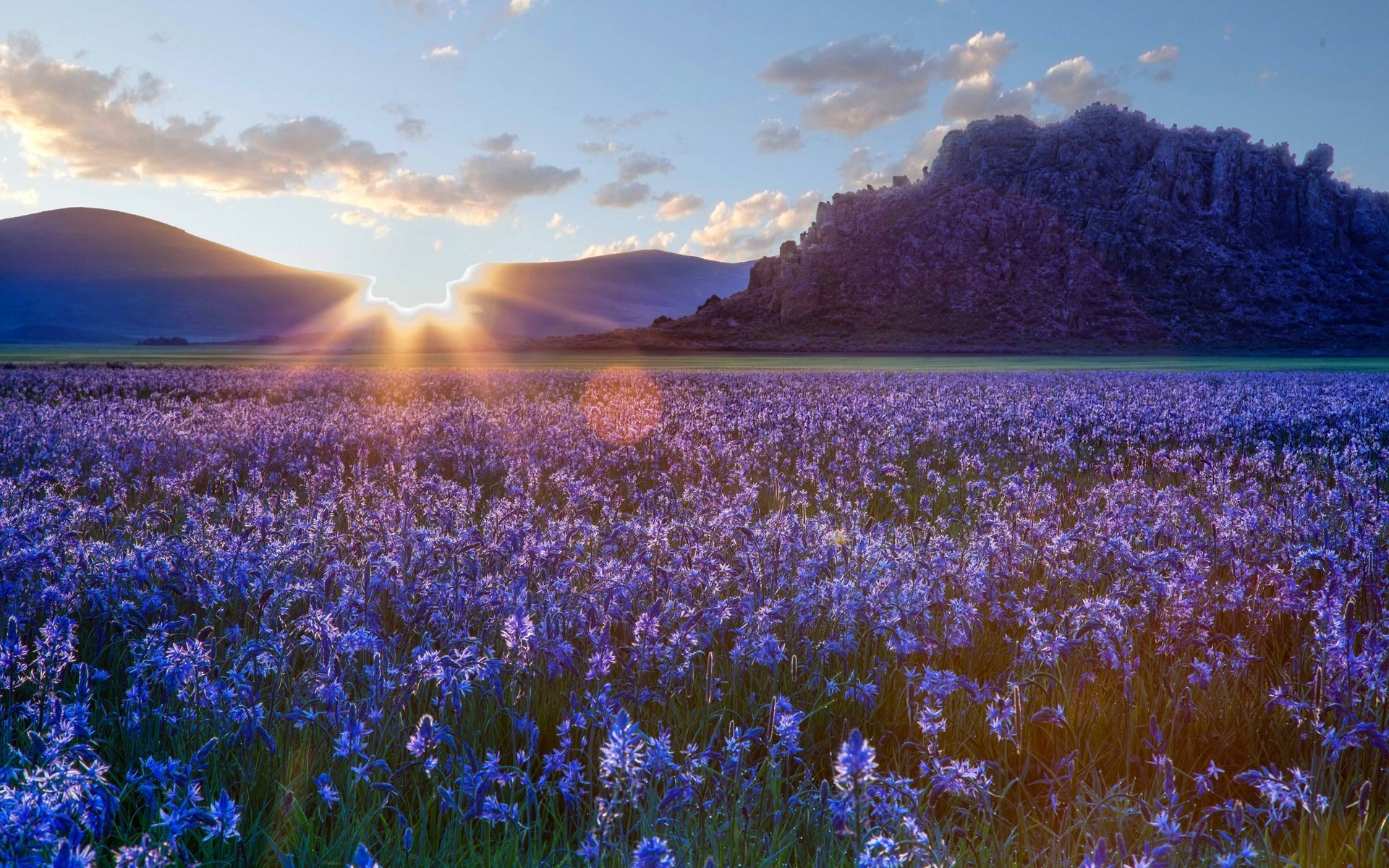 поле цветы рассвет field flowers dawn  № 3837119 загрузить