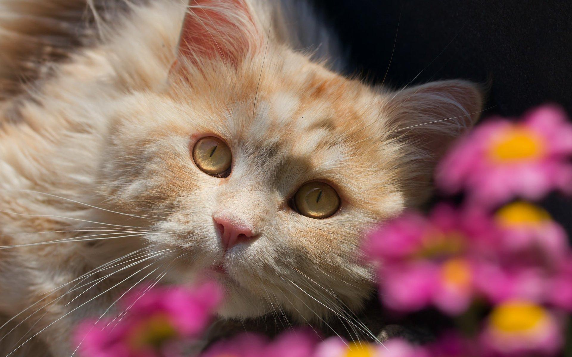 кошка цветы красиво фотография слух что именно