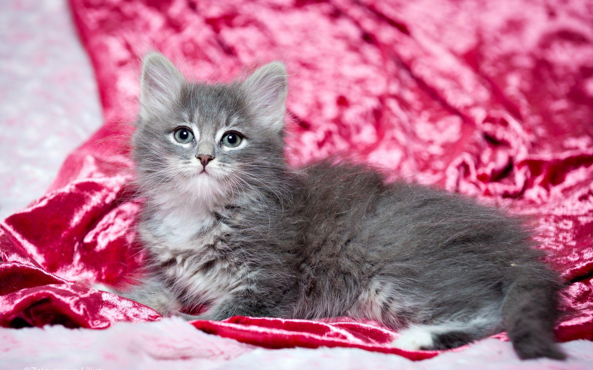природа животные кот котенок серый журавлики nature animals cat kitten grey cranes  № 654648  скачать