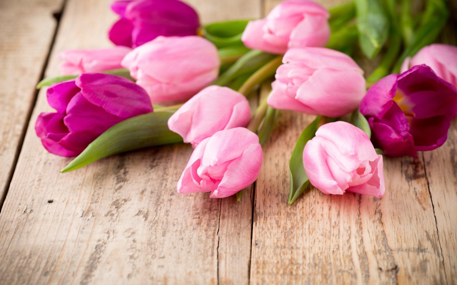 перминова картинки красивые цветы тюльпаны розовые животные