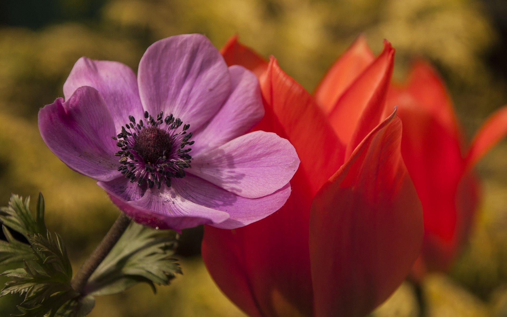 как сфотографировать цветок макро шедевром принято поздравлять