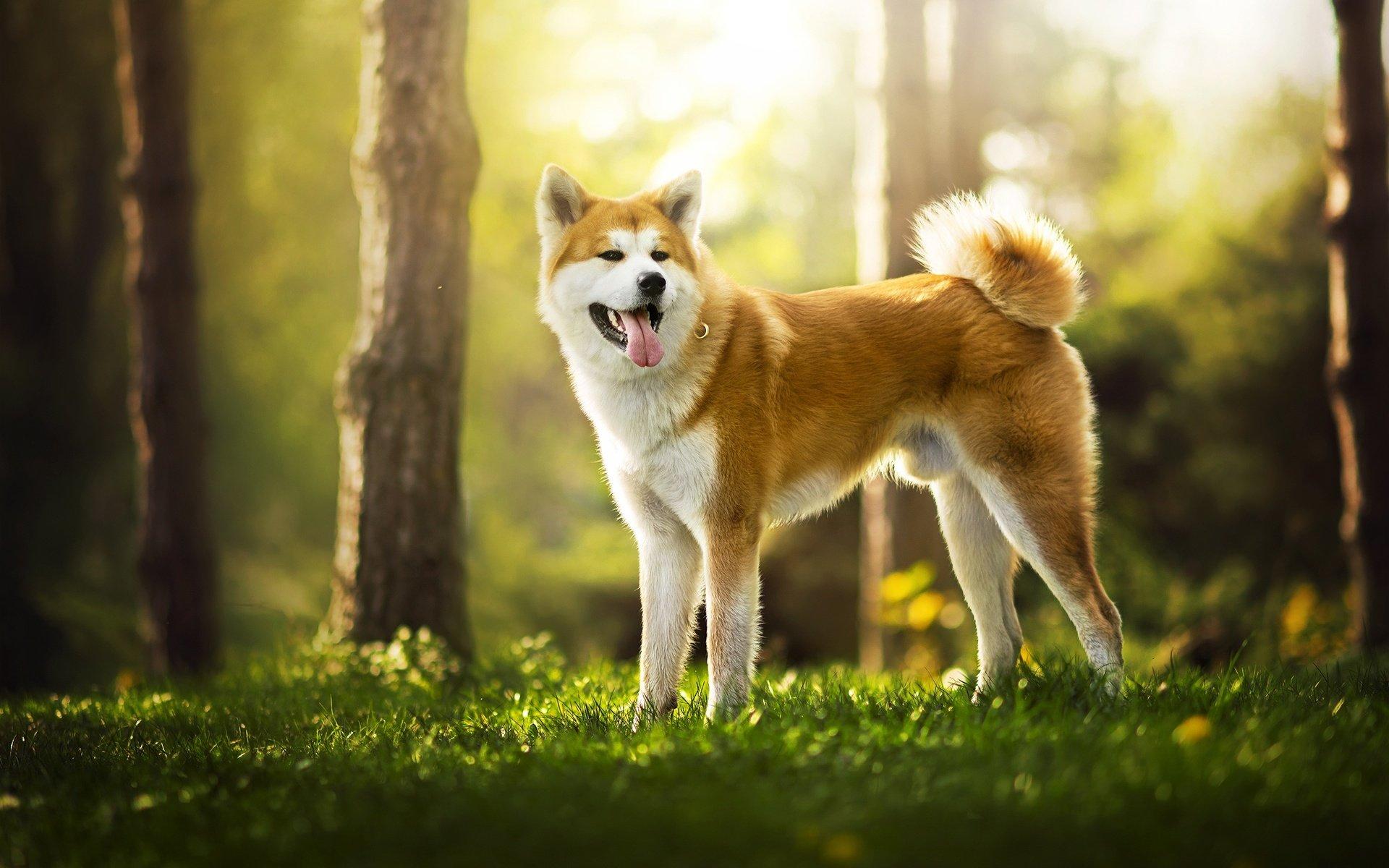 Самые красивые фото собак на природе