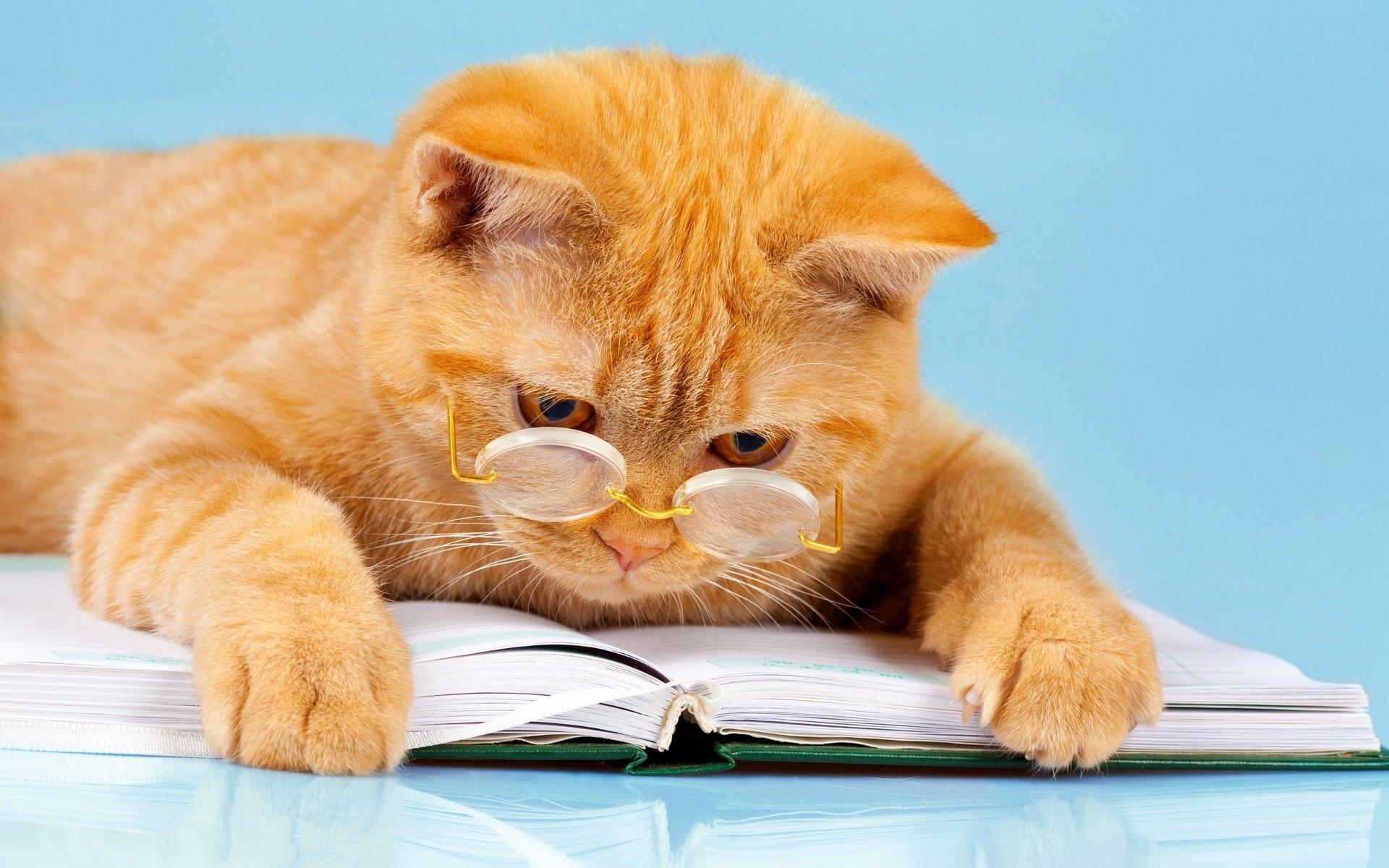 картинки послушный котик между известными