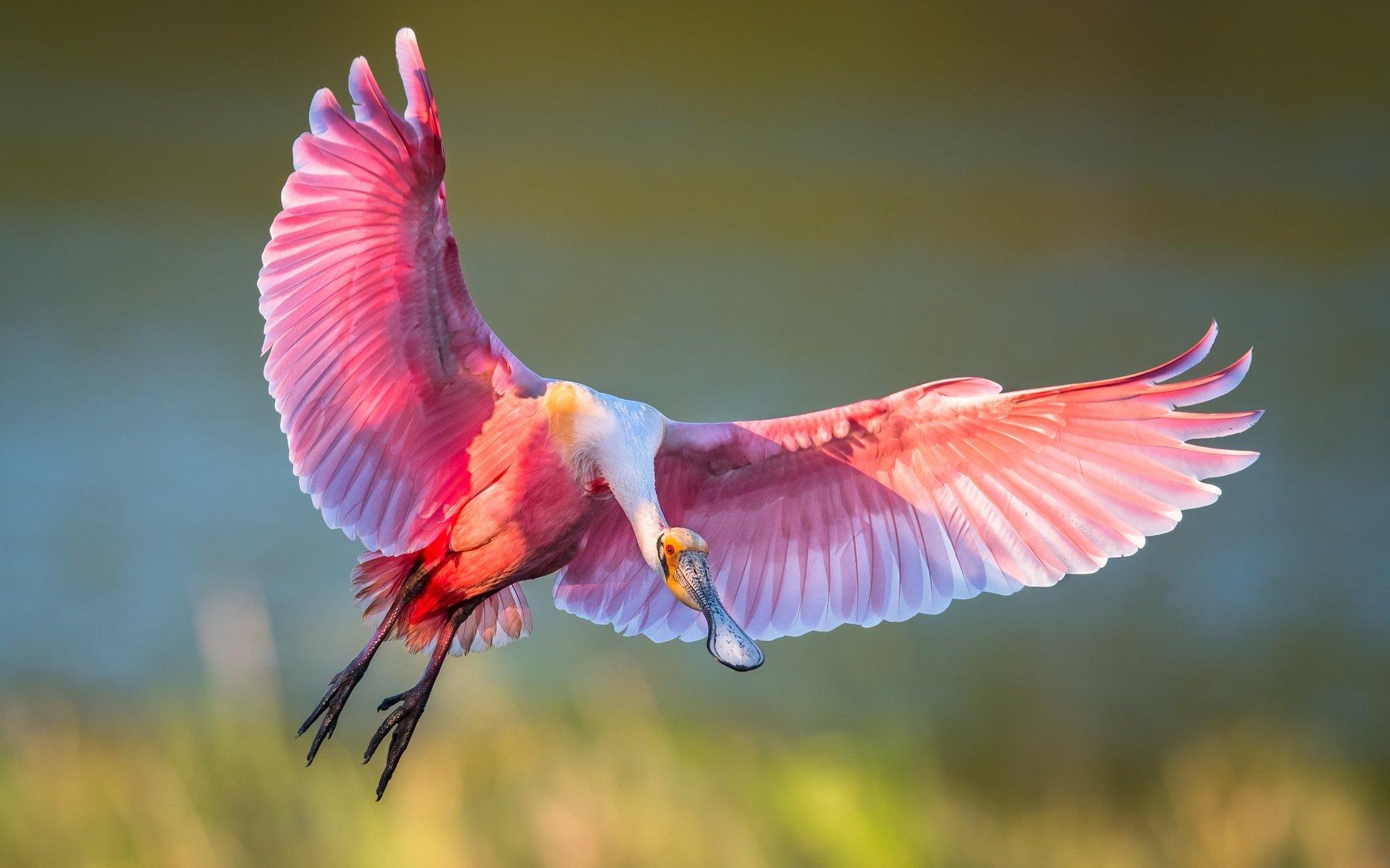 птица ветка клюв крылья  № 1996081 загрузить
