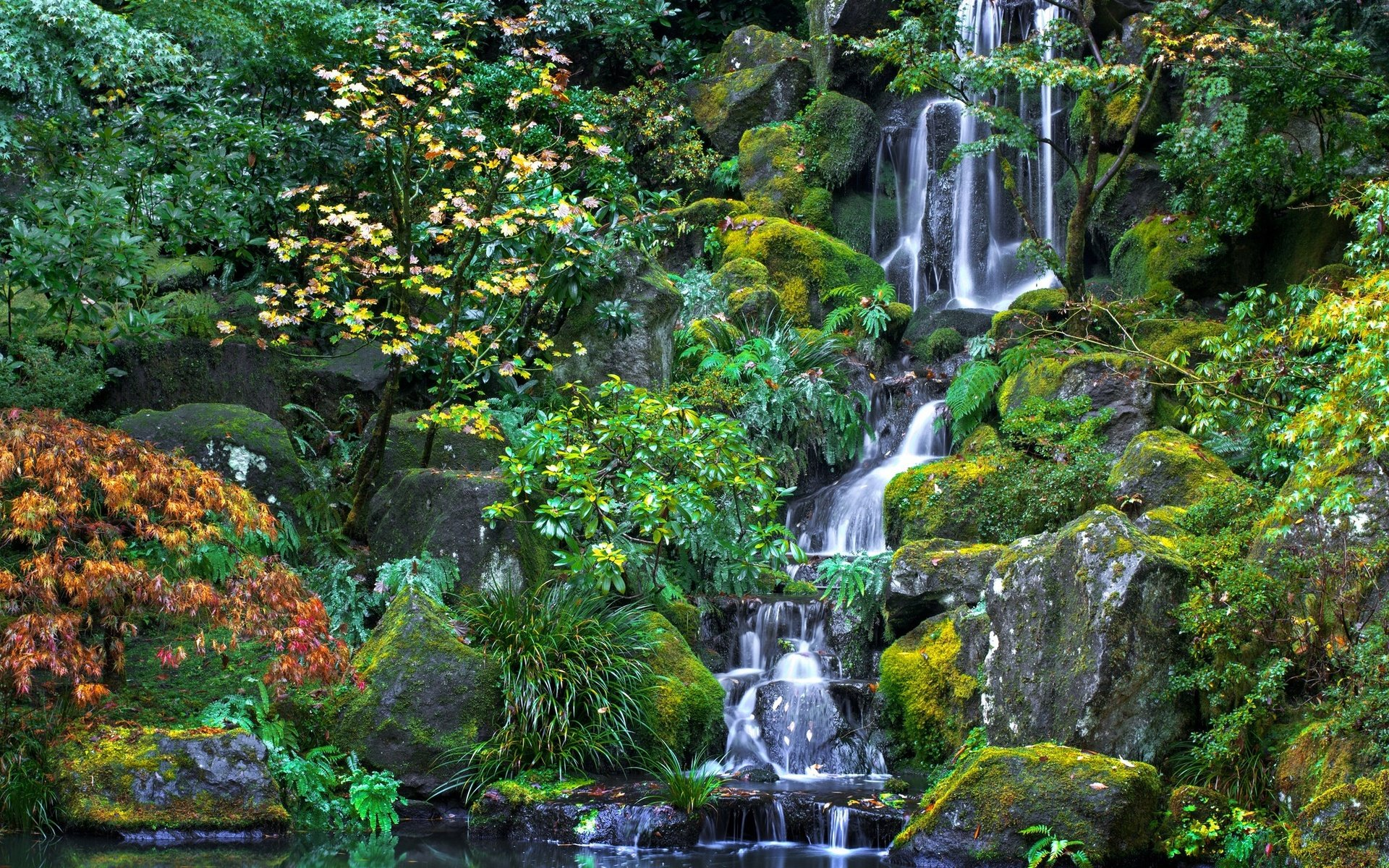 природа раскраска и фото деревья водопады мини-птиц