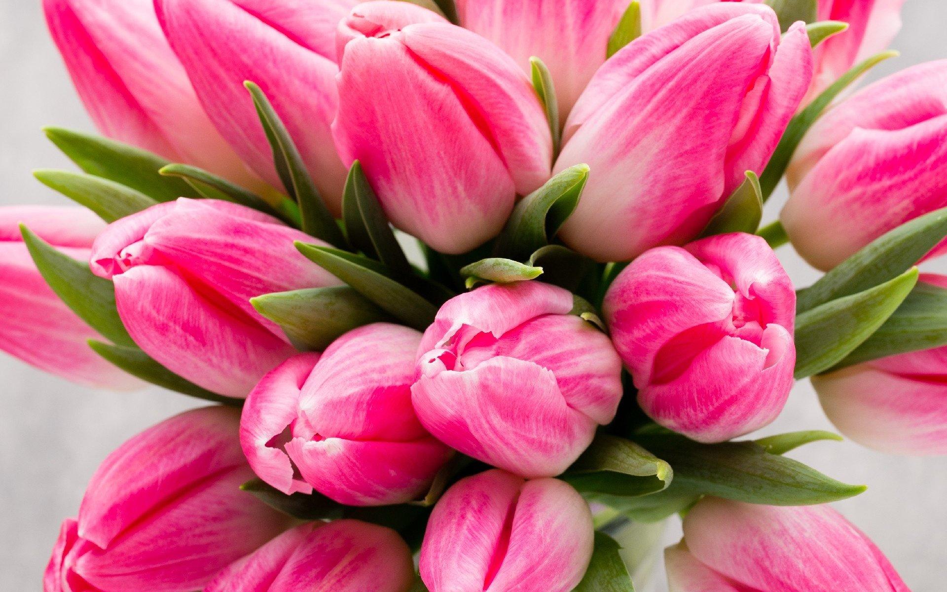 Открытка с розовыми тюльпанами