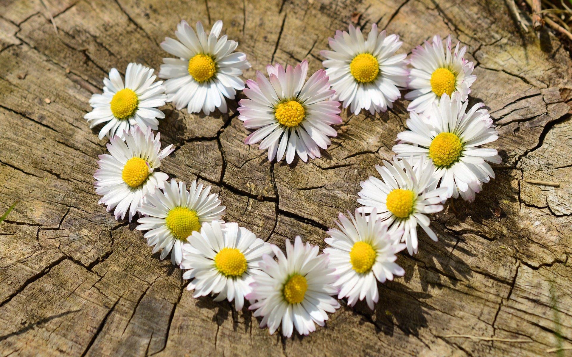 поэтому важно фото цветка любви счету самого